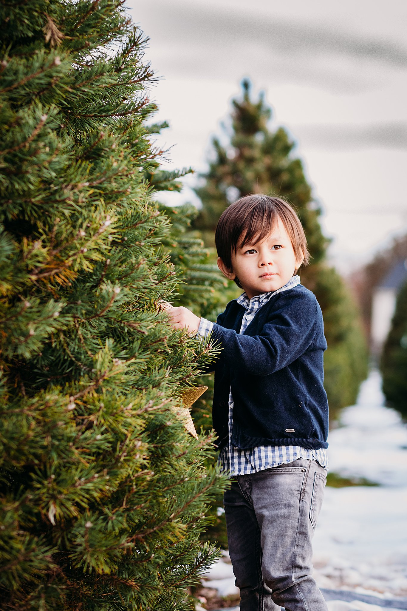 Christmas Tree Farm Photographer in PA
