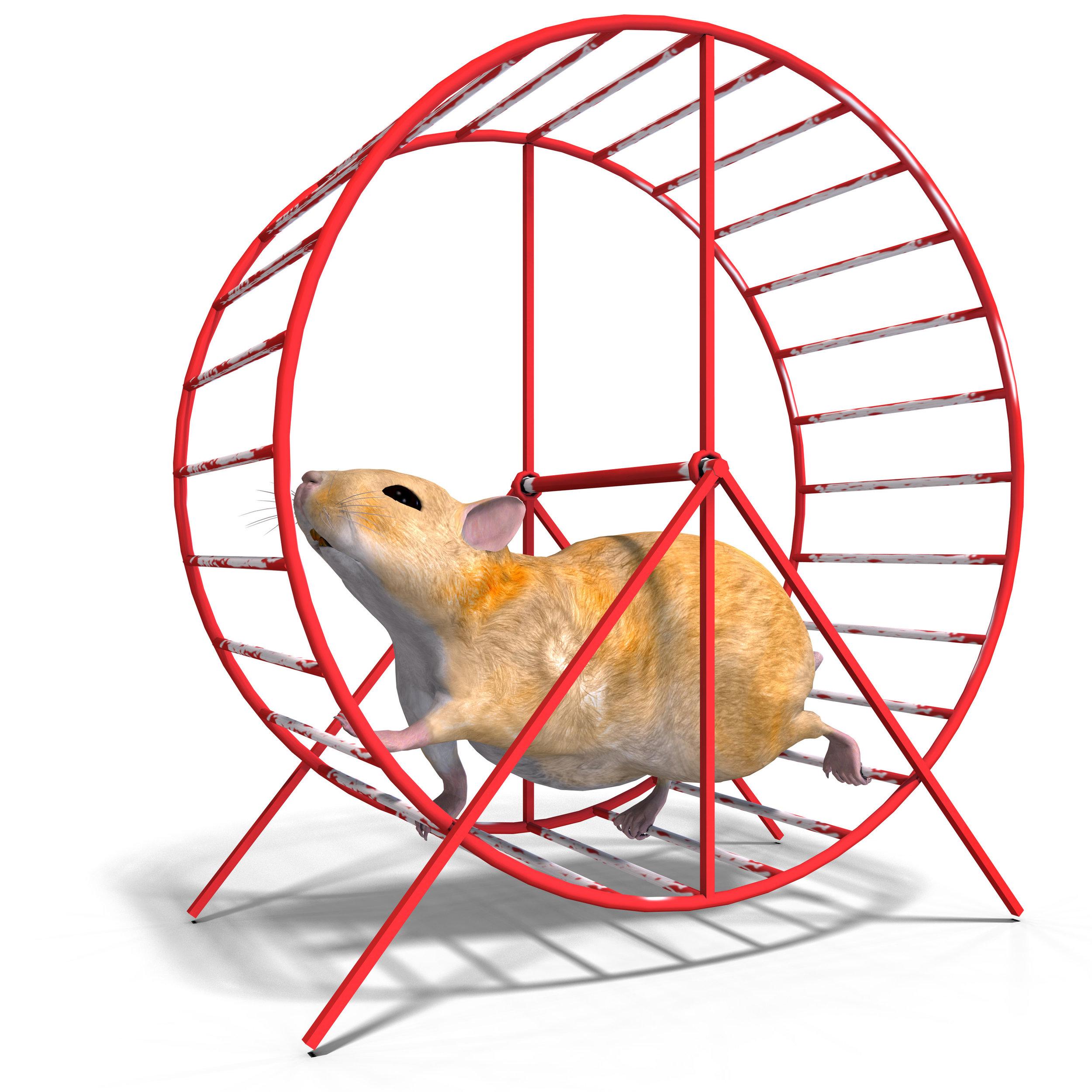 Hamster wheel.jpg