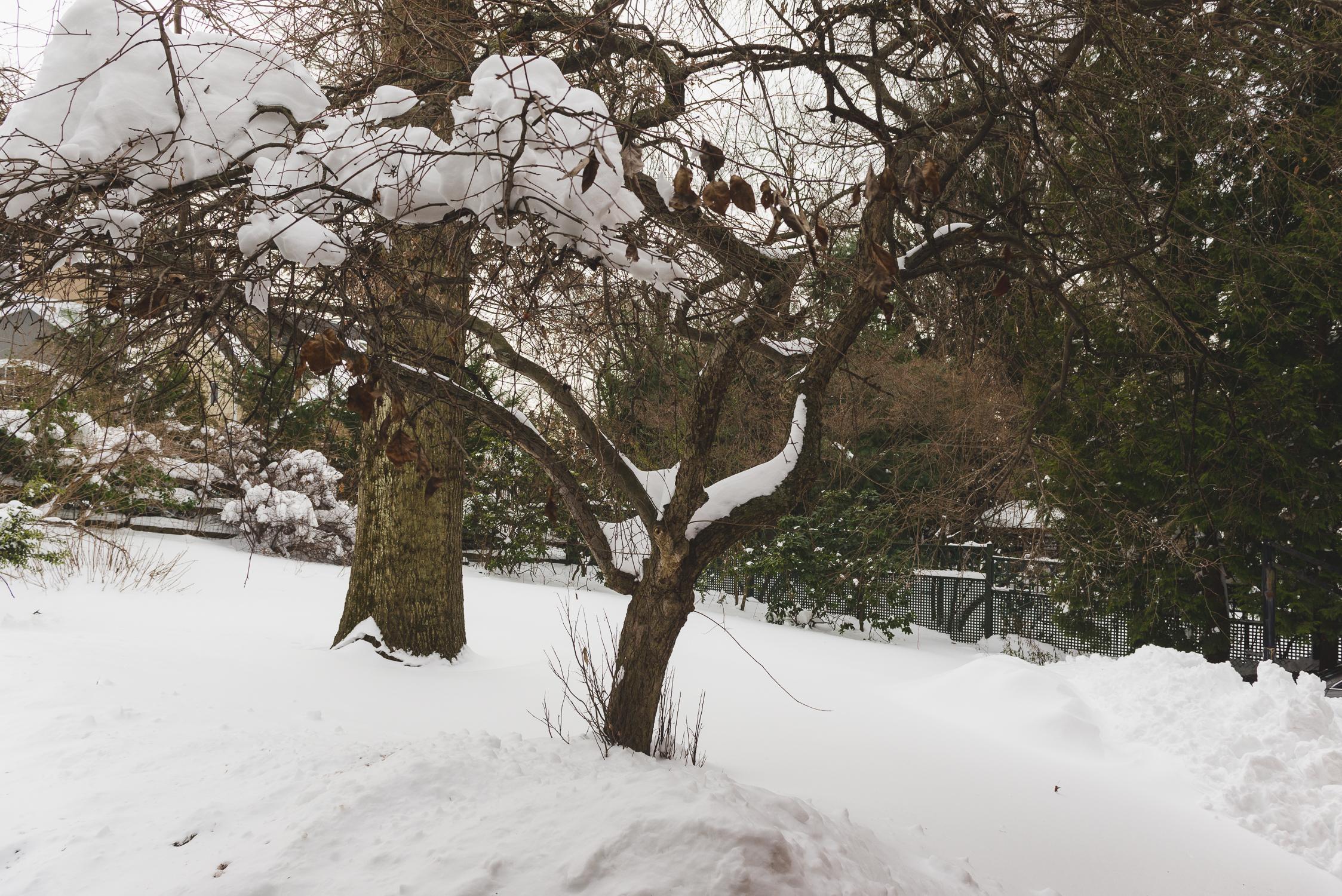 Snowy backyard. / 1/25/16 / N.J.