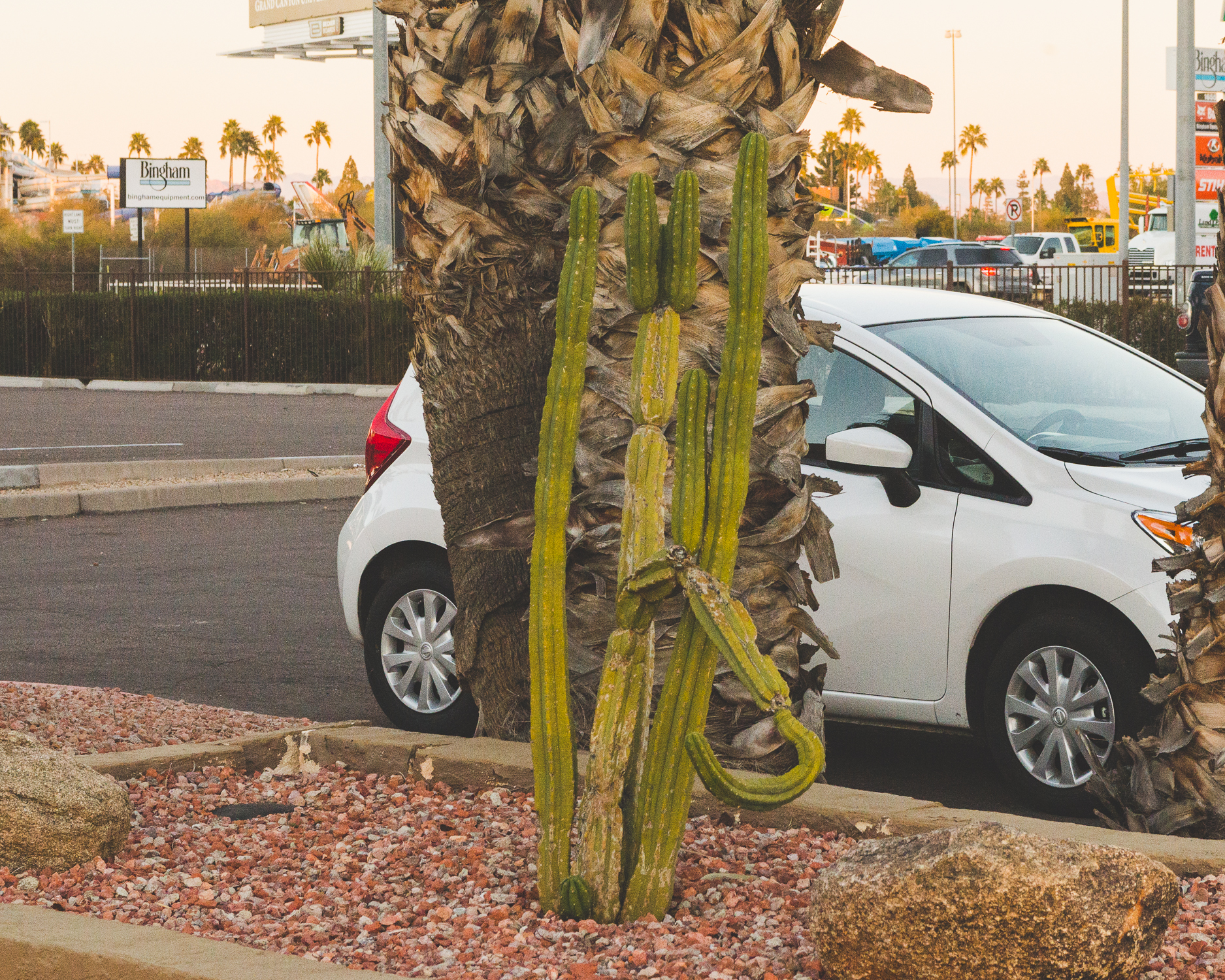 A cactus- I said I love them! / 2/7/16 / Mesa, AZ