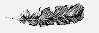 Feather-7.jpg