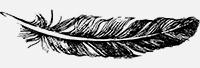 Feather-2.jpg