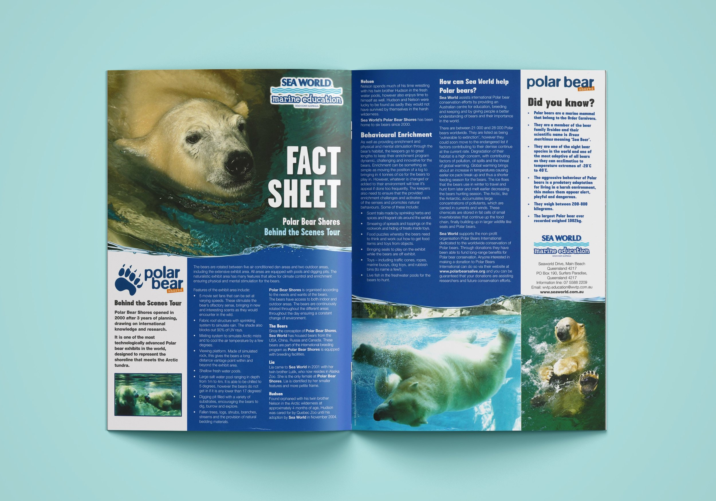 Sea World Flyer 2.jpg