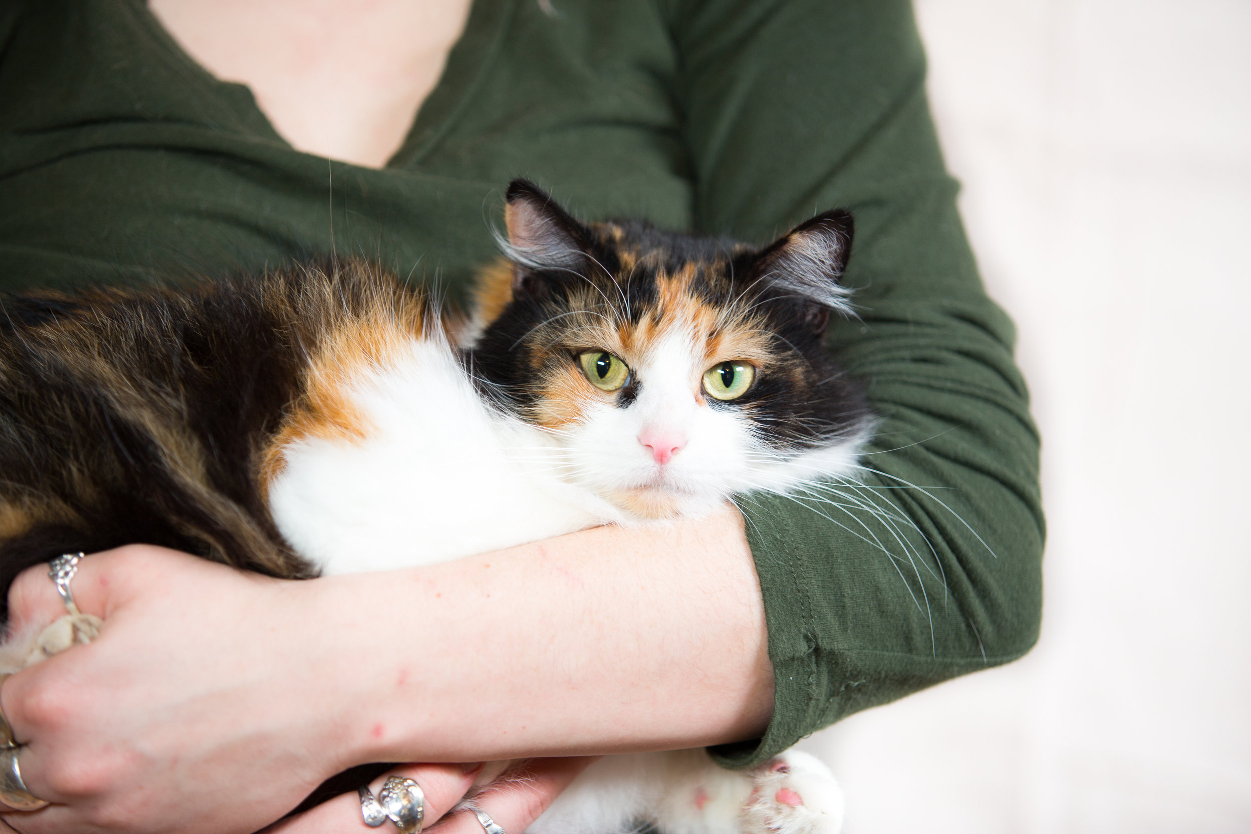 Patches, 3-year-old female