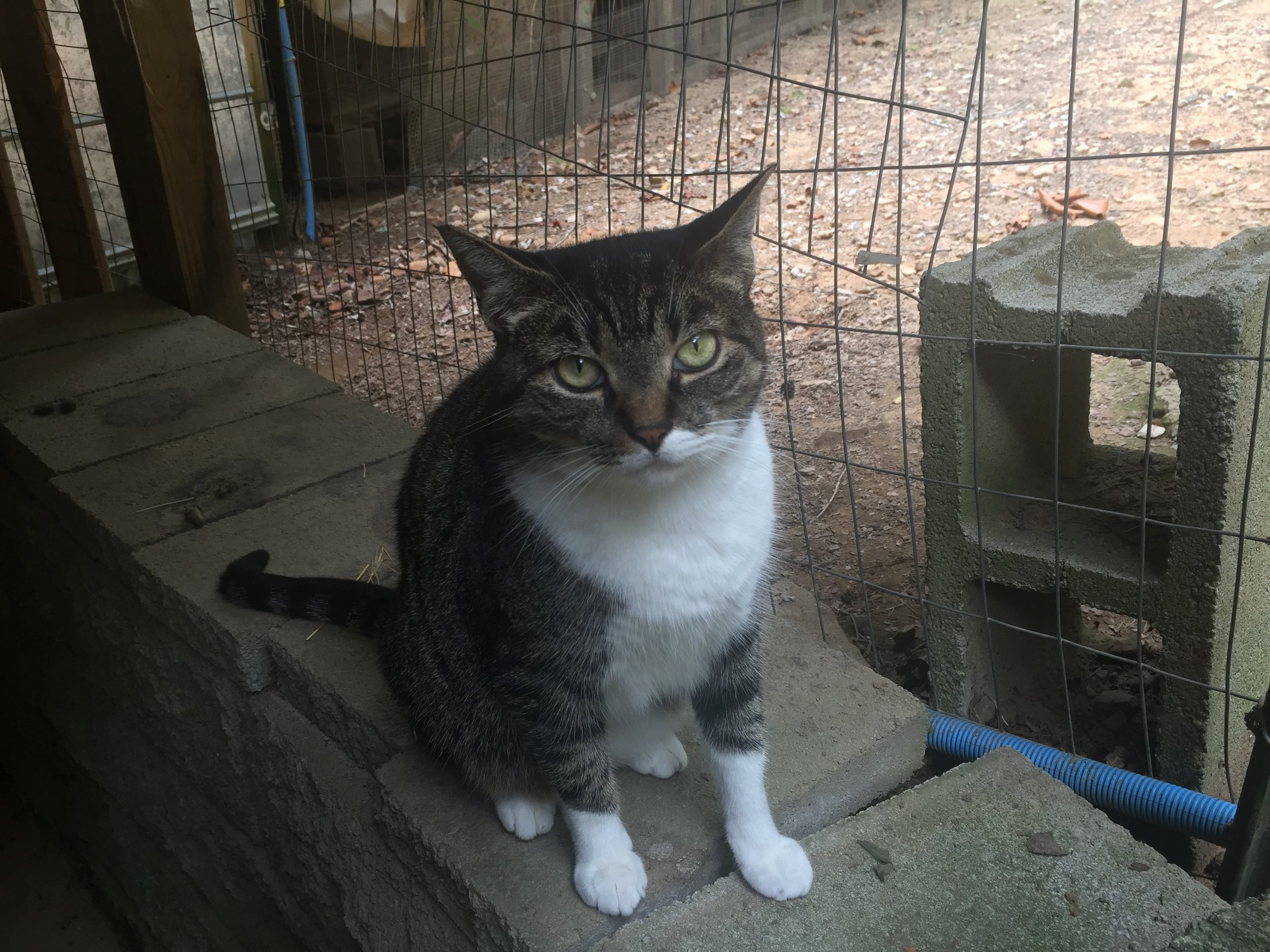Omega, 10-year-old male
