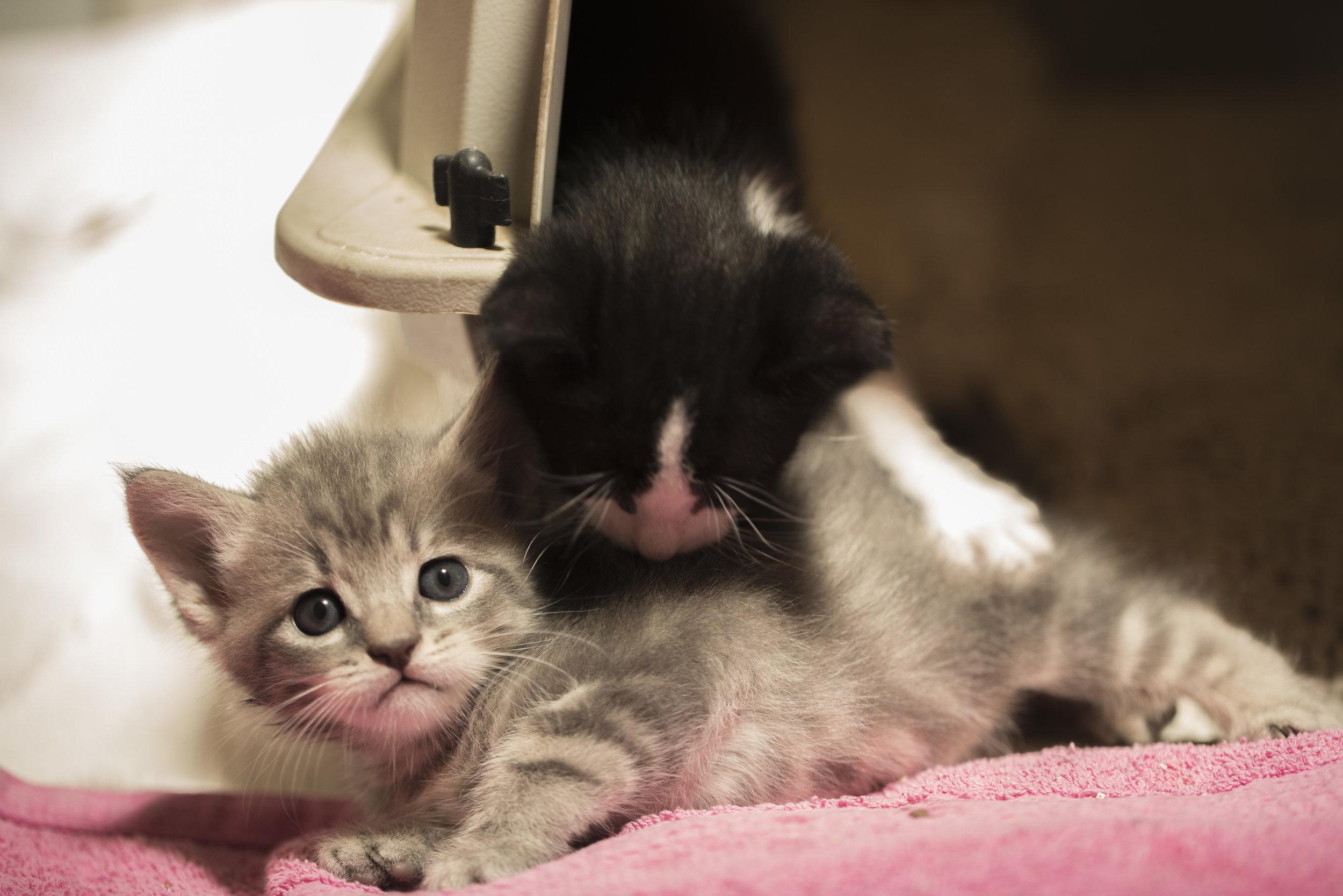 G and BW kitties.jpg