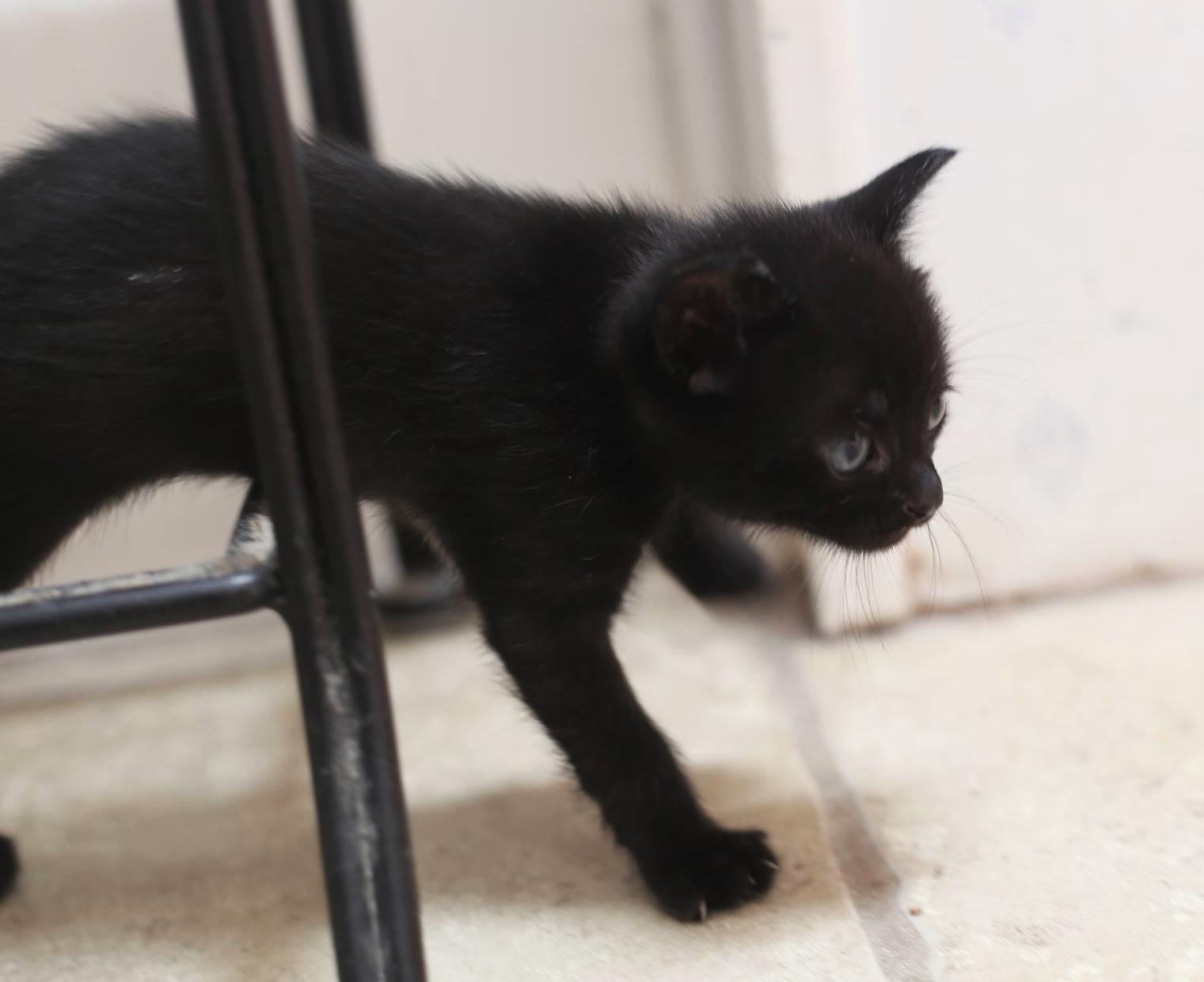 Black-Kitten-1.jpg