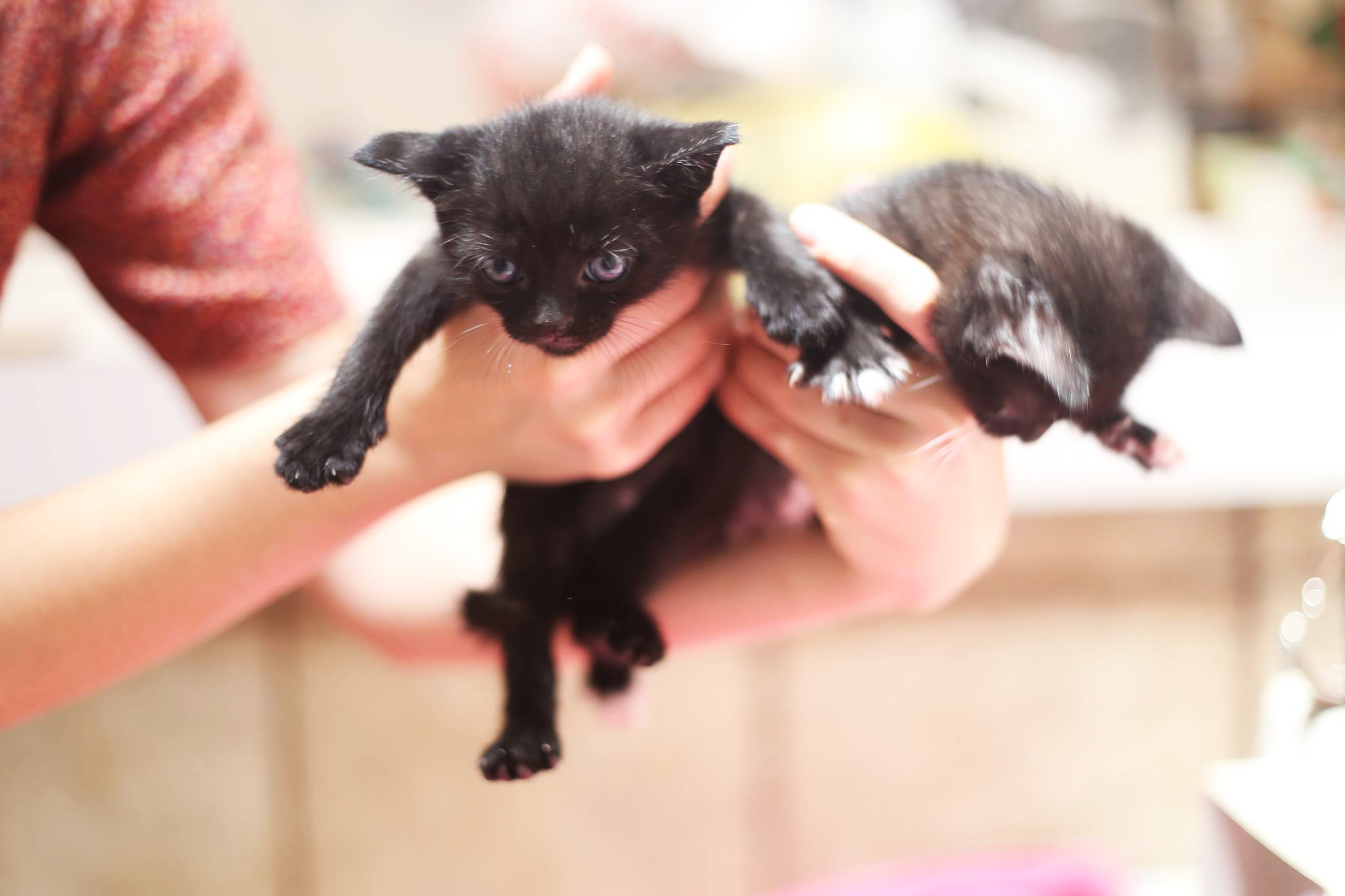 Handful-of-Kittens-2.png