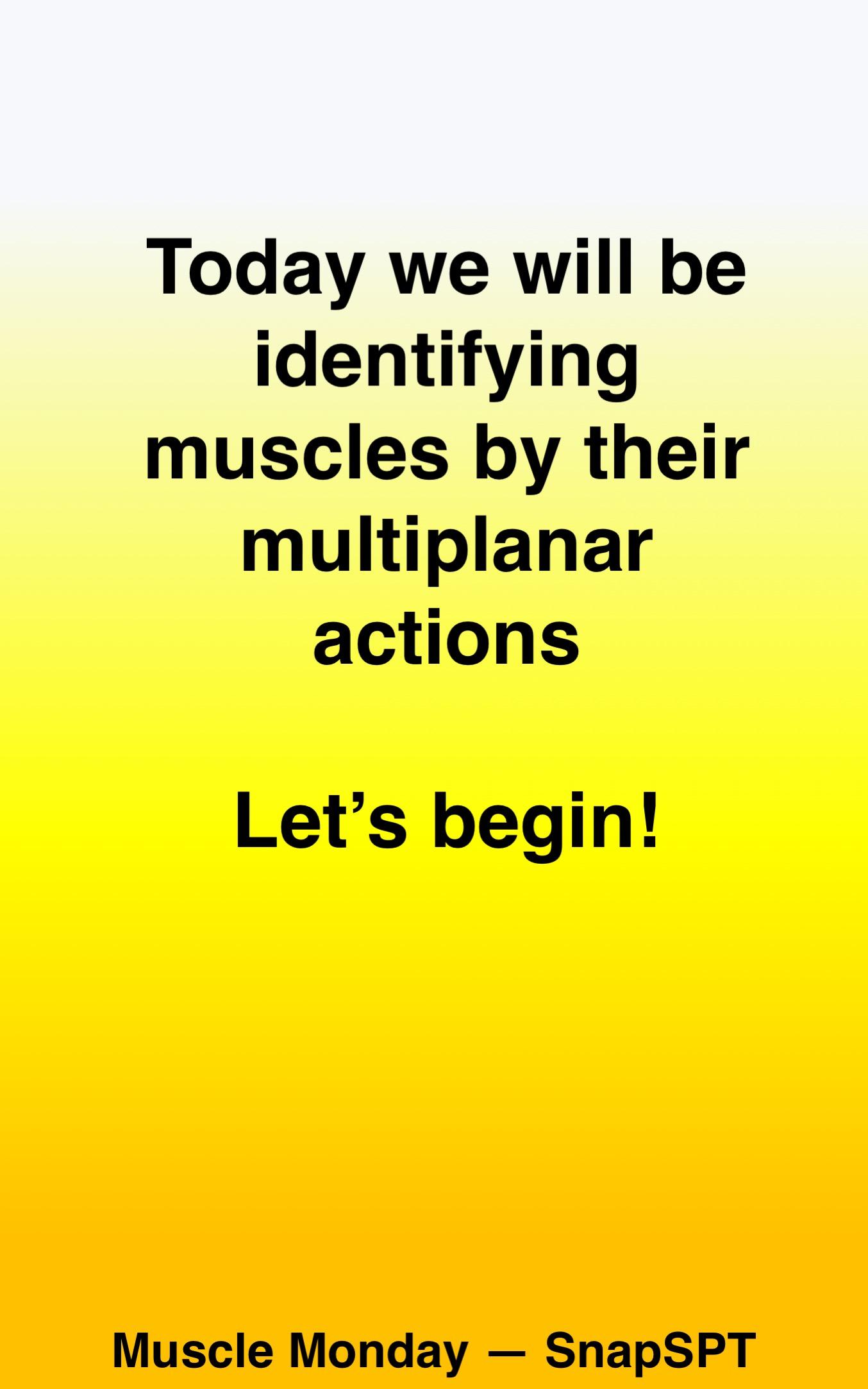 MuscleActions03.jpg