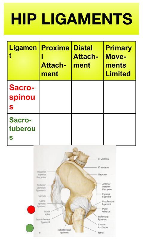 Hip Ligaments (12).jpg