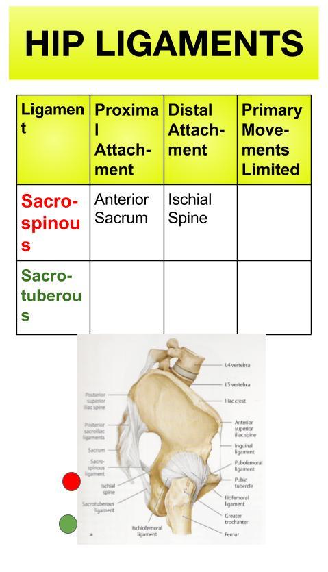 Hip Ligaments (14).jpg