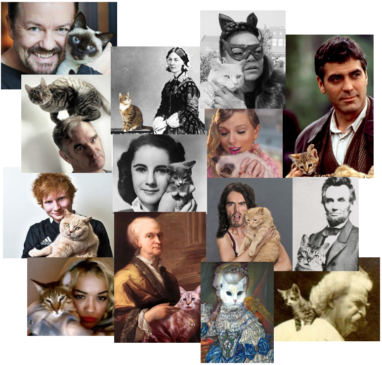 Name The Cat Lover.png