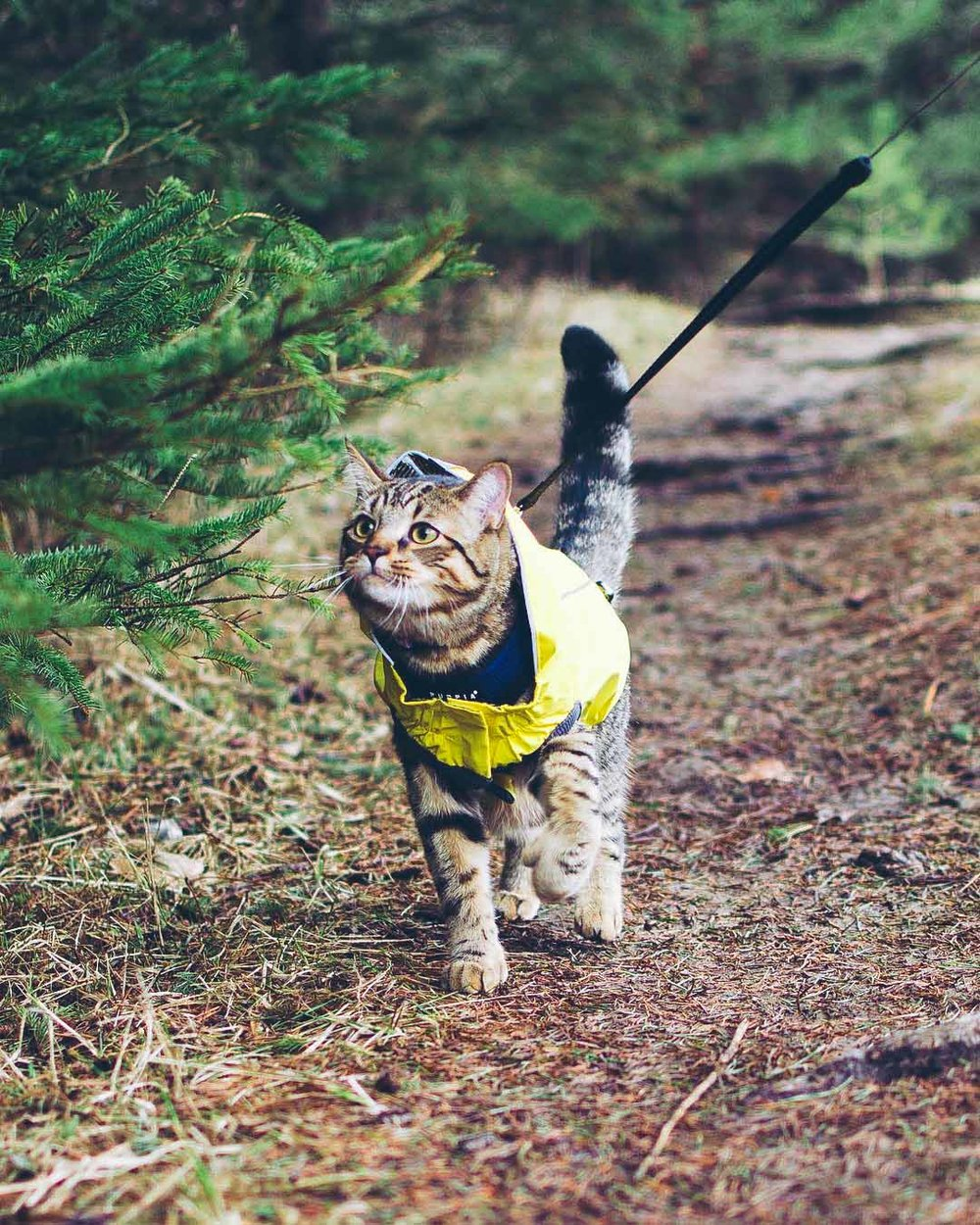 hiking-with-a-cat.jpg