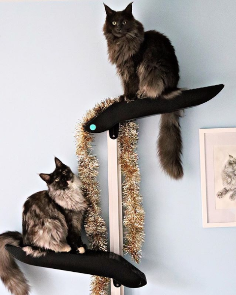 Maine Coon Catipilla.png