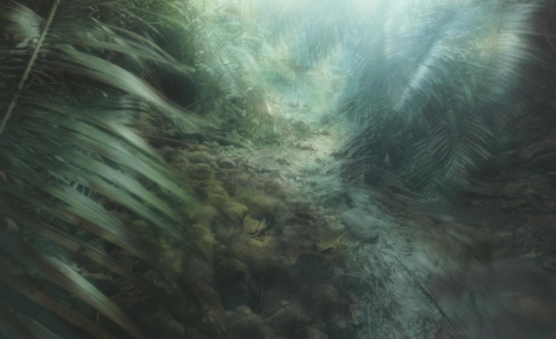 Forest brook. Iriomoto, Japan, 2015.