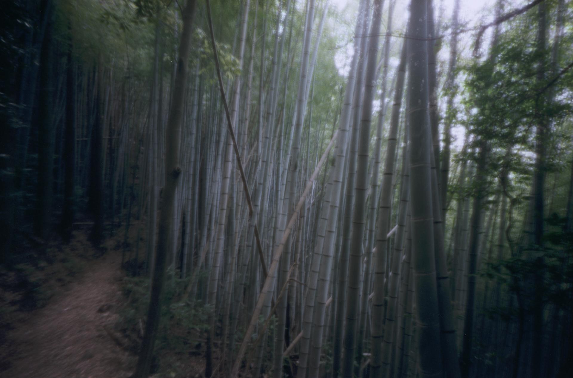 Blue forest. Shikoku, Japan, 2013