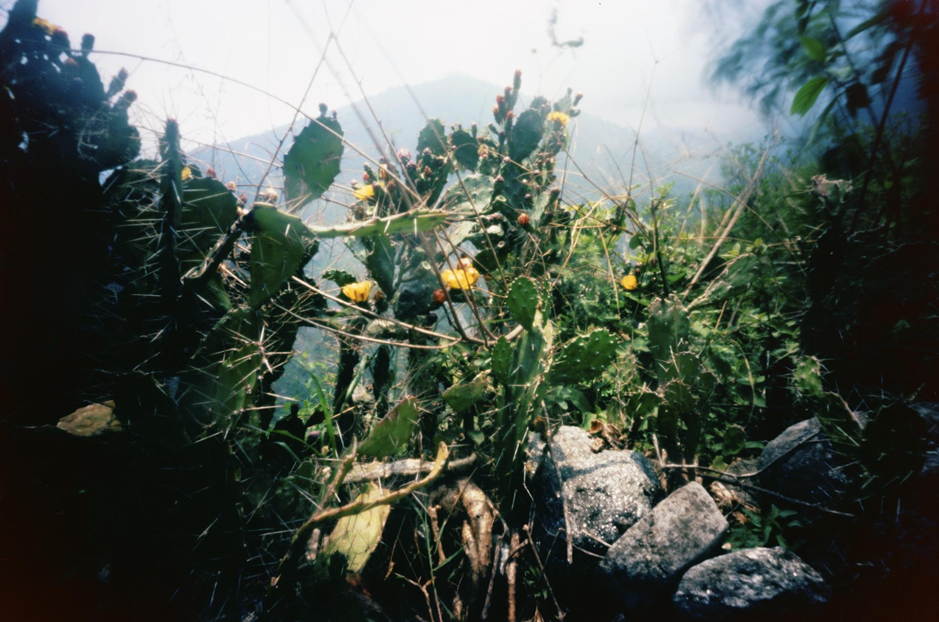 Cactus. Kalopani, Nepal, 2012