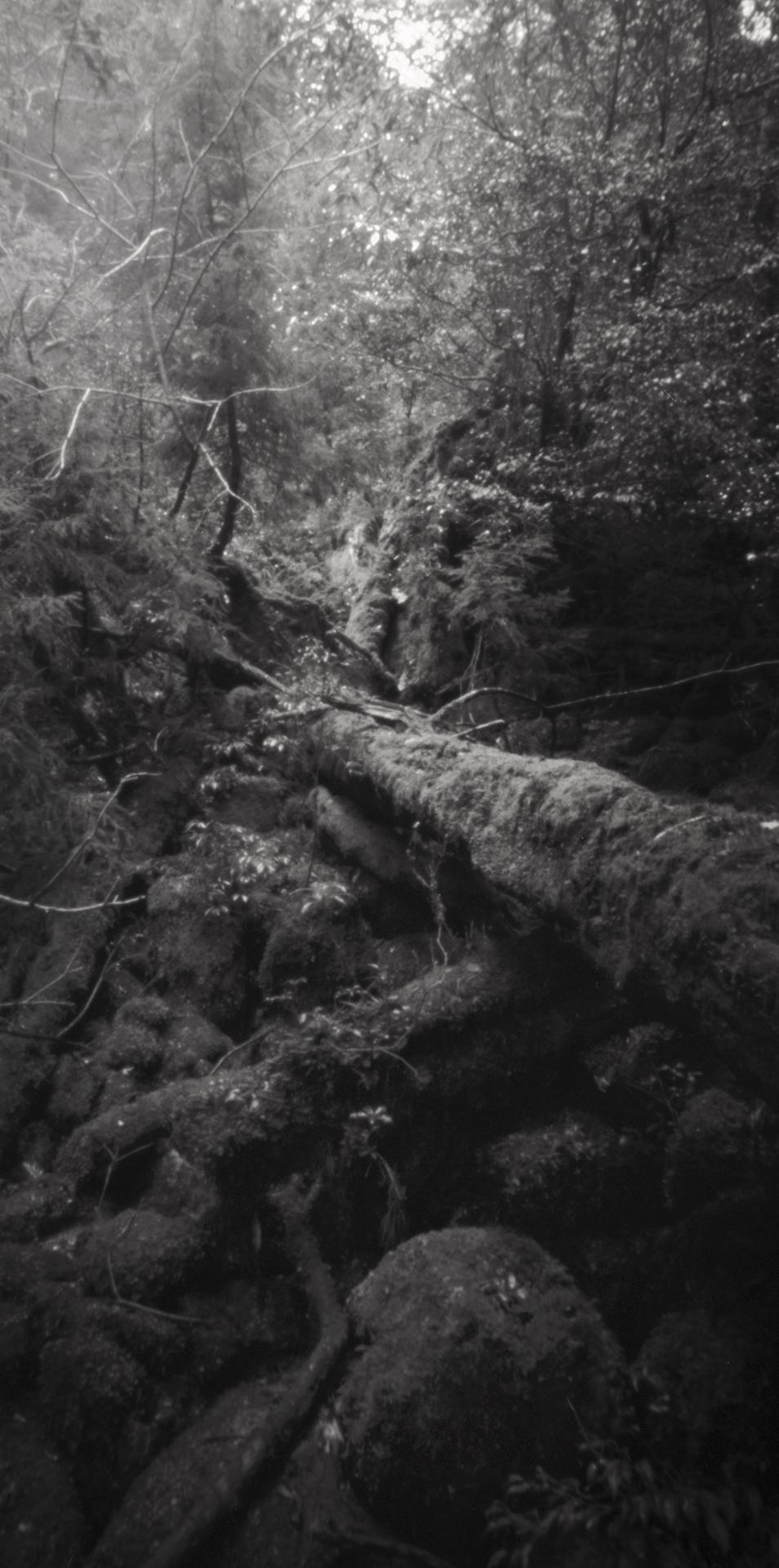 Fallen tree, Kusugawa trail. Japan, Yakushima, 2015