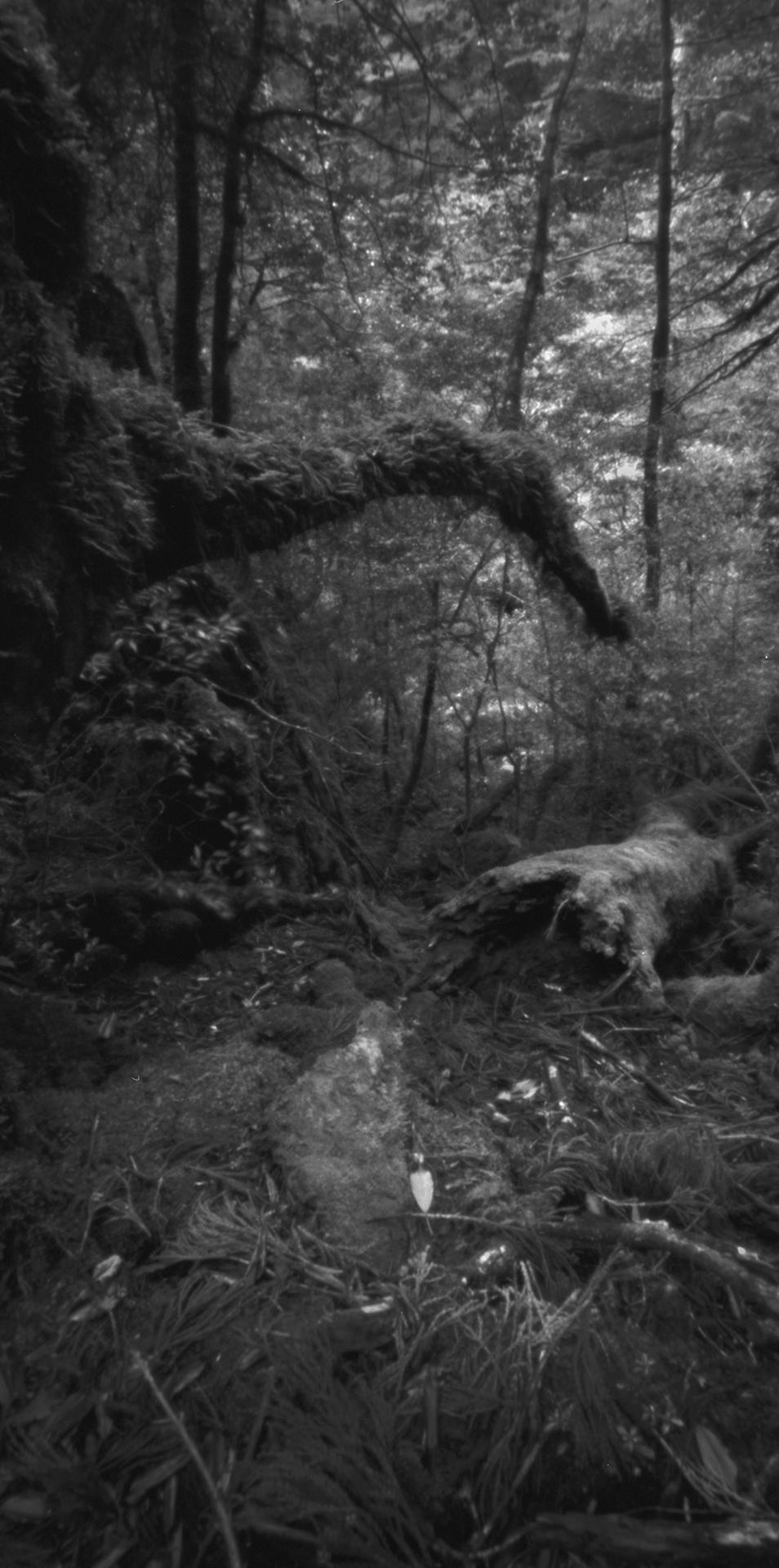 Rainforest, Kusugawa trail. Japan, Yakushima, 2015