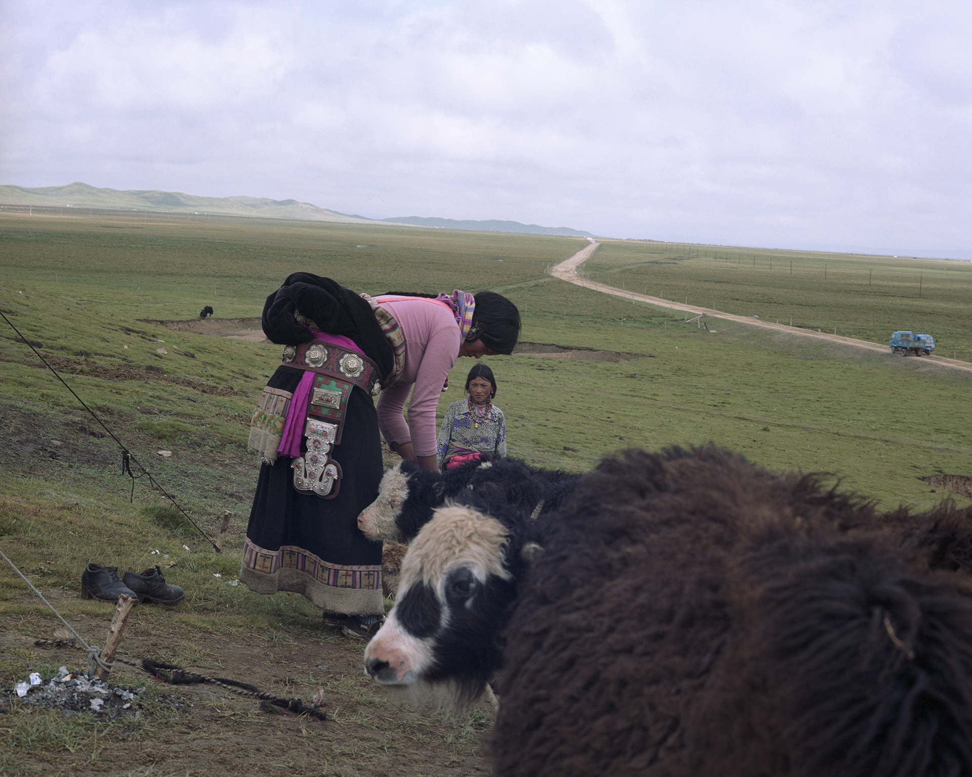 2007 Qinghai - the women tie the calfs to the rope. Their mothers will come soon to feed them. For the women an easy way to catch the yaks to milk them.