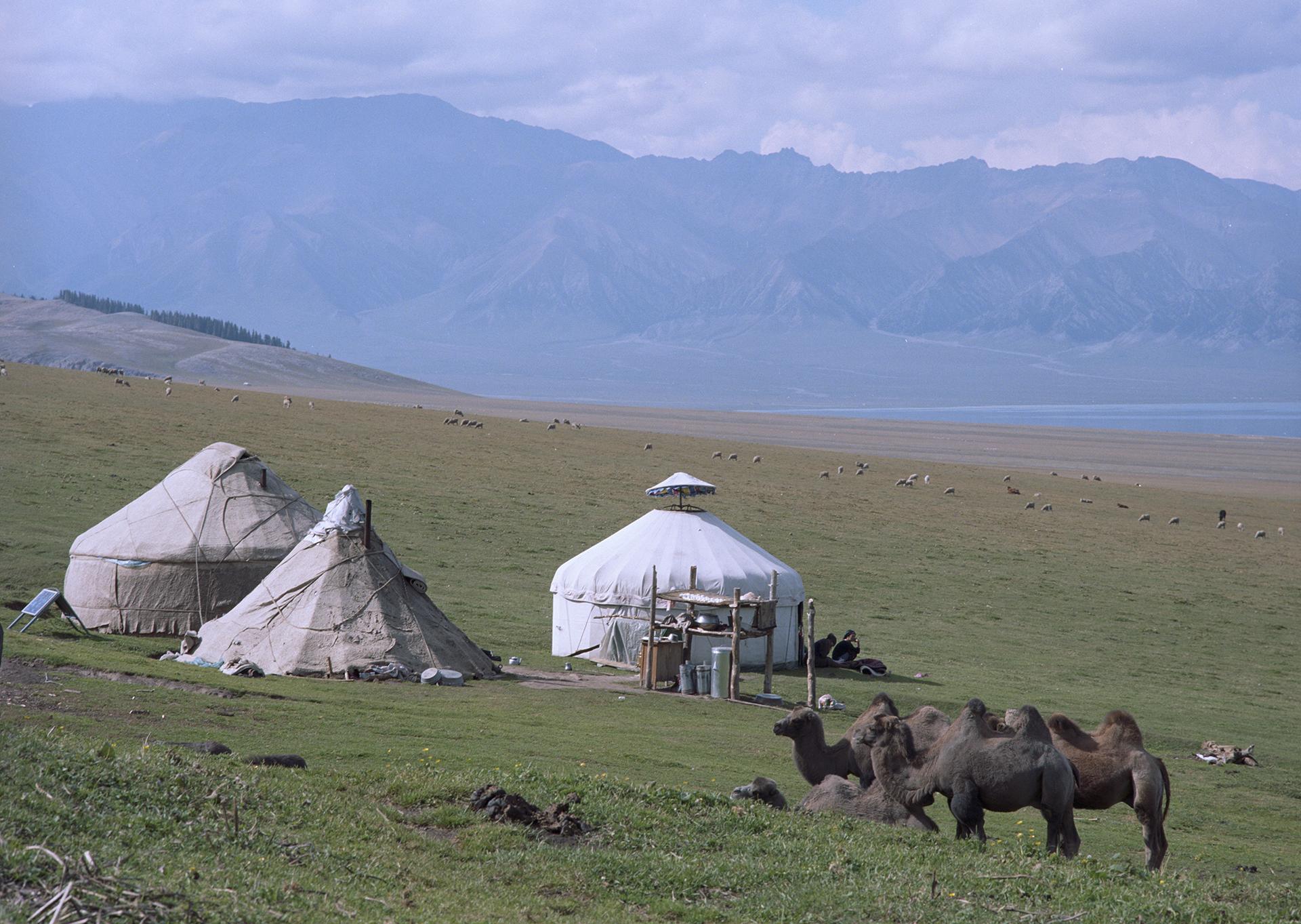 2007 Xinjiang - Yurts and camels around Sayram Lake.
