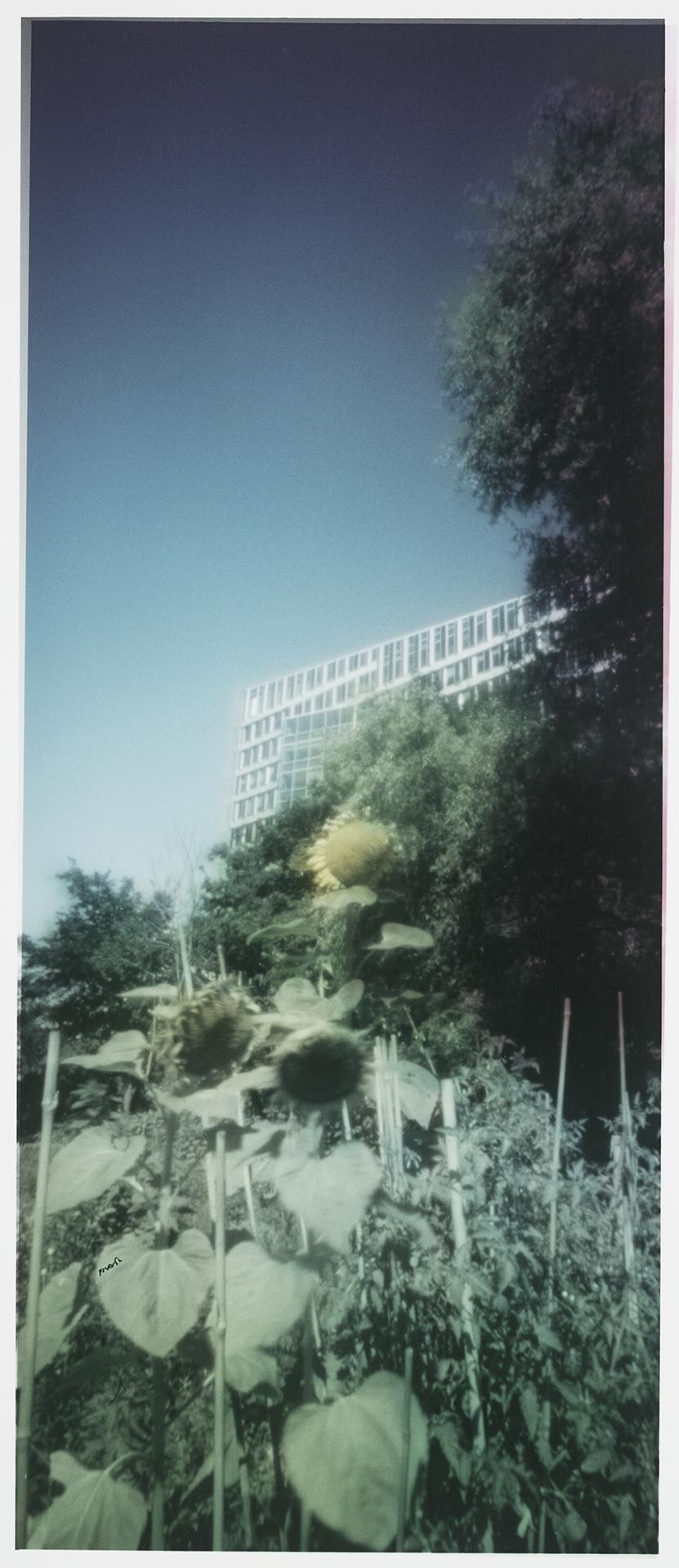 Amsterdam-Zuidas, The Edge, Mahlerlaan.
