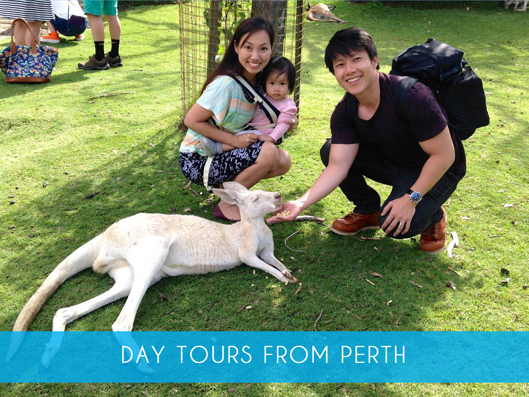 Day tours from Perth   Catch the coach from Perth to visit Penguin Island and take in some other uniquely Western Australian experiences and wildlife all in the same day.  Adults from $179   MORE INFO