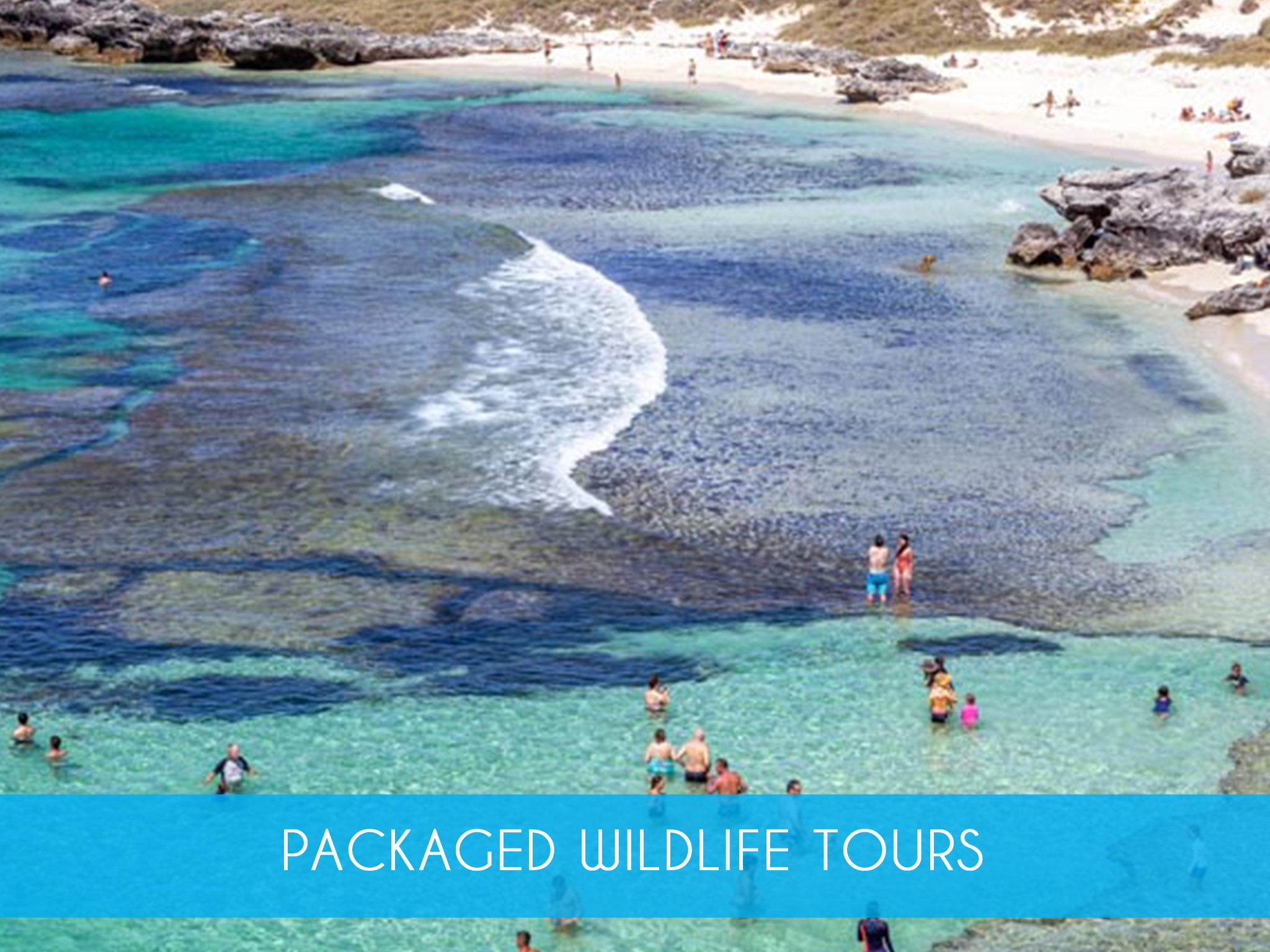 Packaged Wildlife Tours    The perfect pass for those who enjoy scenic coastal cruises, have a passion for marine life and life on the wild side. Combines Dolphin Cruise, Perth Lunch Cruise & Rottnest Island Ferry with Coach Tour     Adults from $317.50   MORE INFO