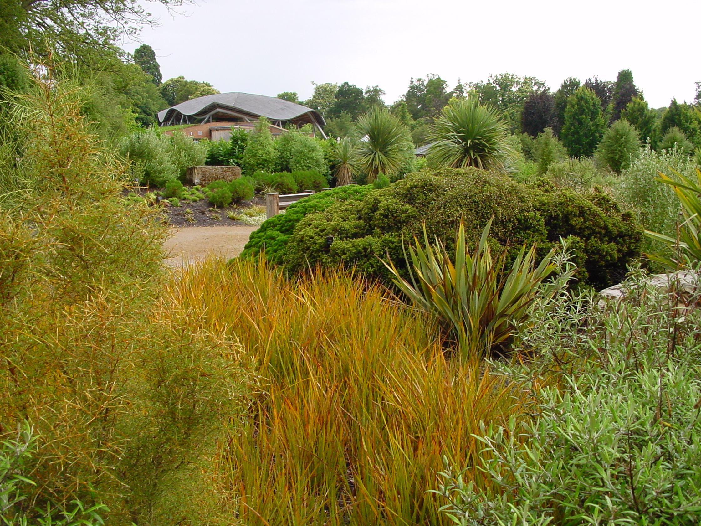 NZ PLANT COLLECTION, SAVILL GARDEN