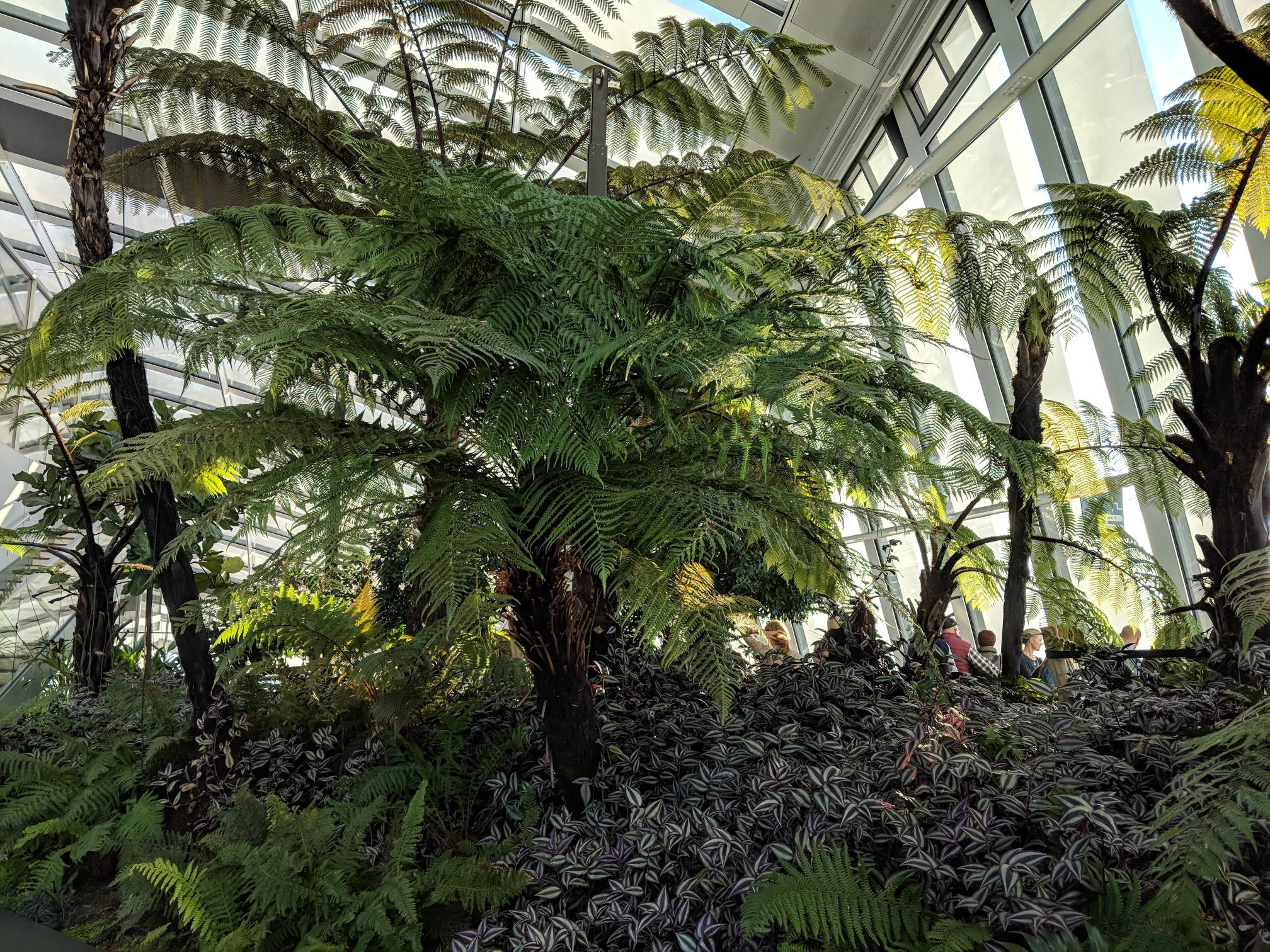 Fern planting at the SkyGarden on 20 Fenchurch Street.