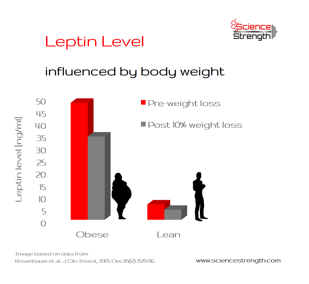 Body weight has an influence on leptin. Individuals with a higher body weight produce more leptin.