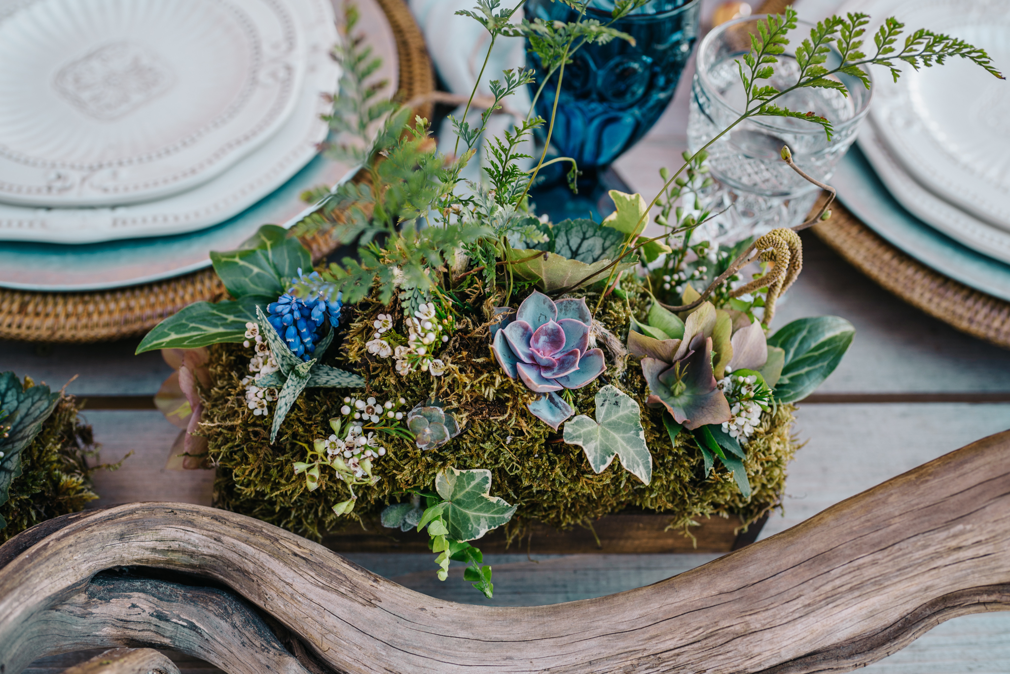 Succulents adorn the table at the styled engagement session with Rose Trail Images at Windy Hill Farm near Raleigh, NC.