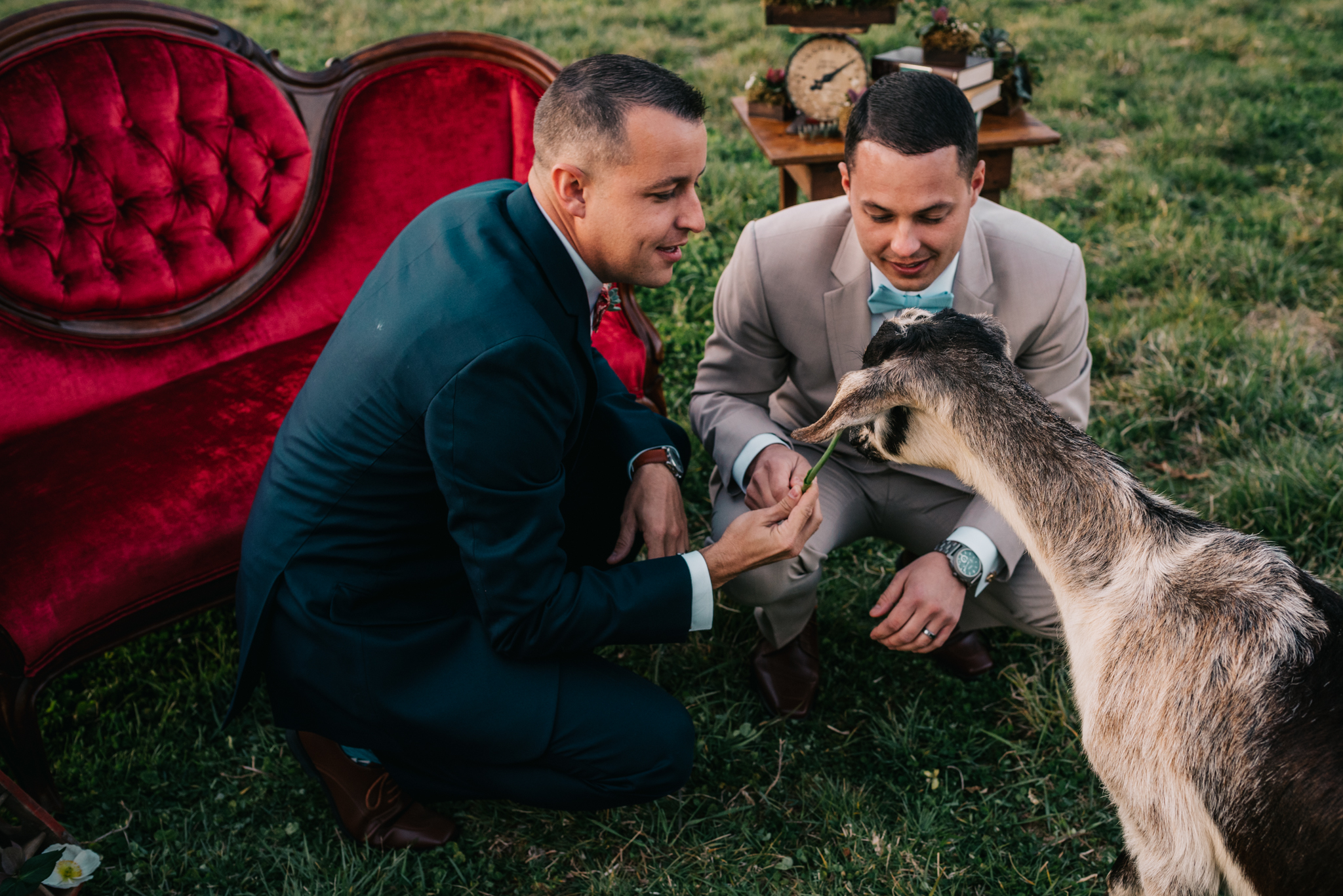 The grooms feed the goat by the red couch and rustic decor during the rustic farm styled engagement session with Rose Trail Images at Windy Hill Farm near Raleigh, NC.
