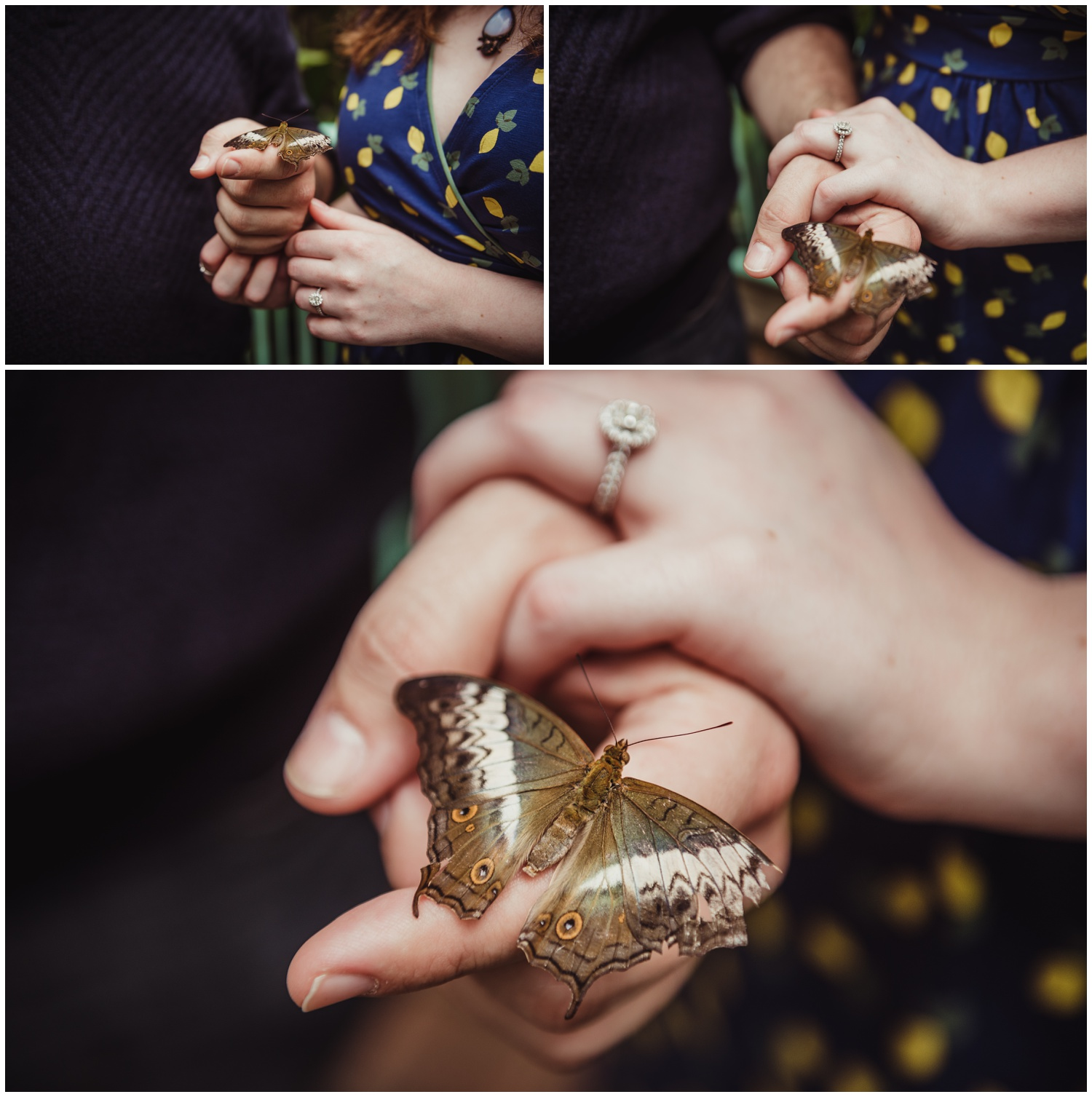 A butterfly lands perfectly on the couples' fingers during their engagement photo session with Rose Trail Images at the Butterfly House in Durham.
