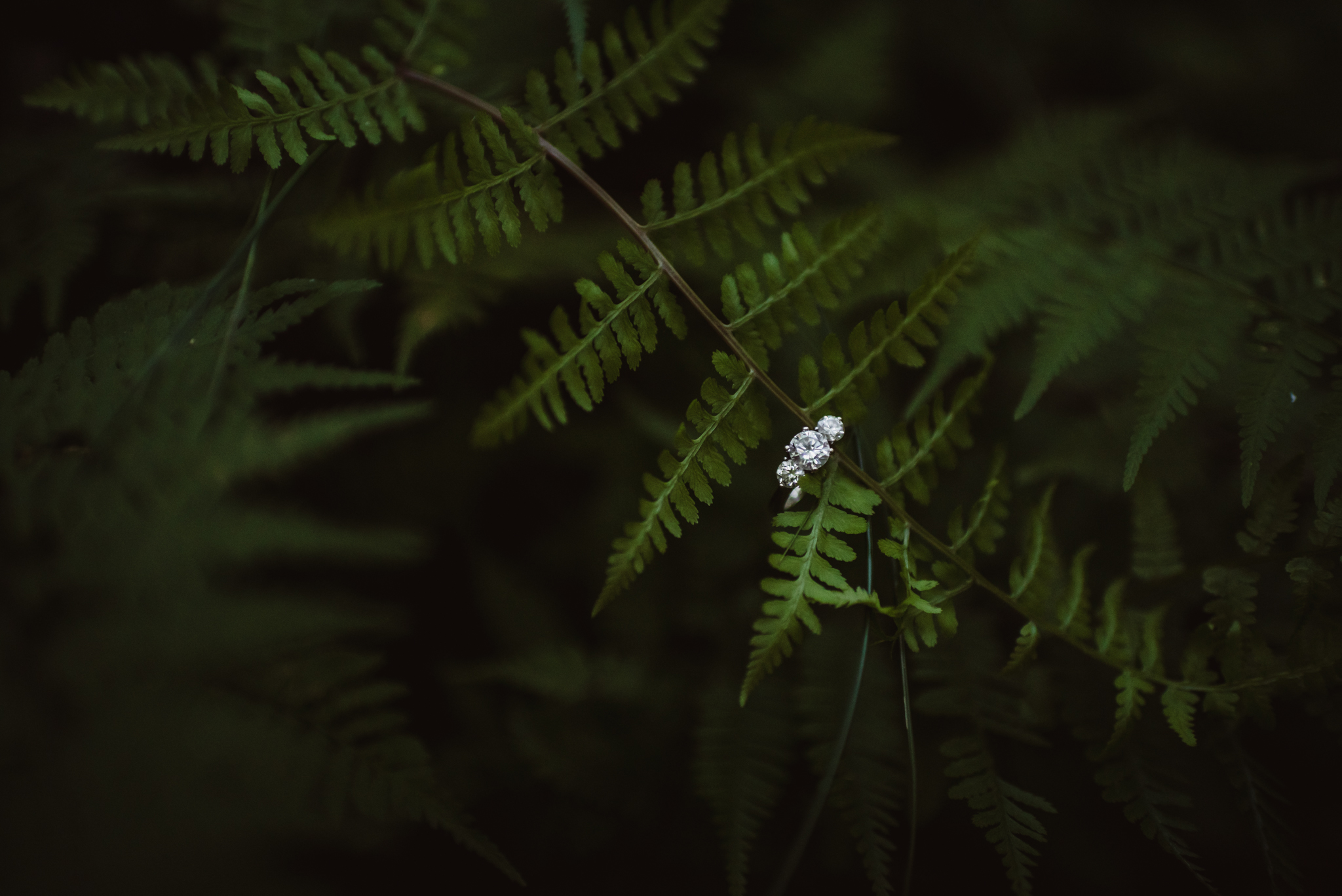 Kristin's engagement ring sparkled in the ferns during her engagement shoot in Raleigh with Rose Trail Images.