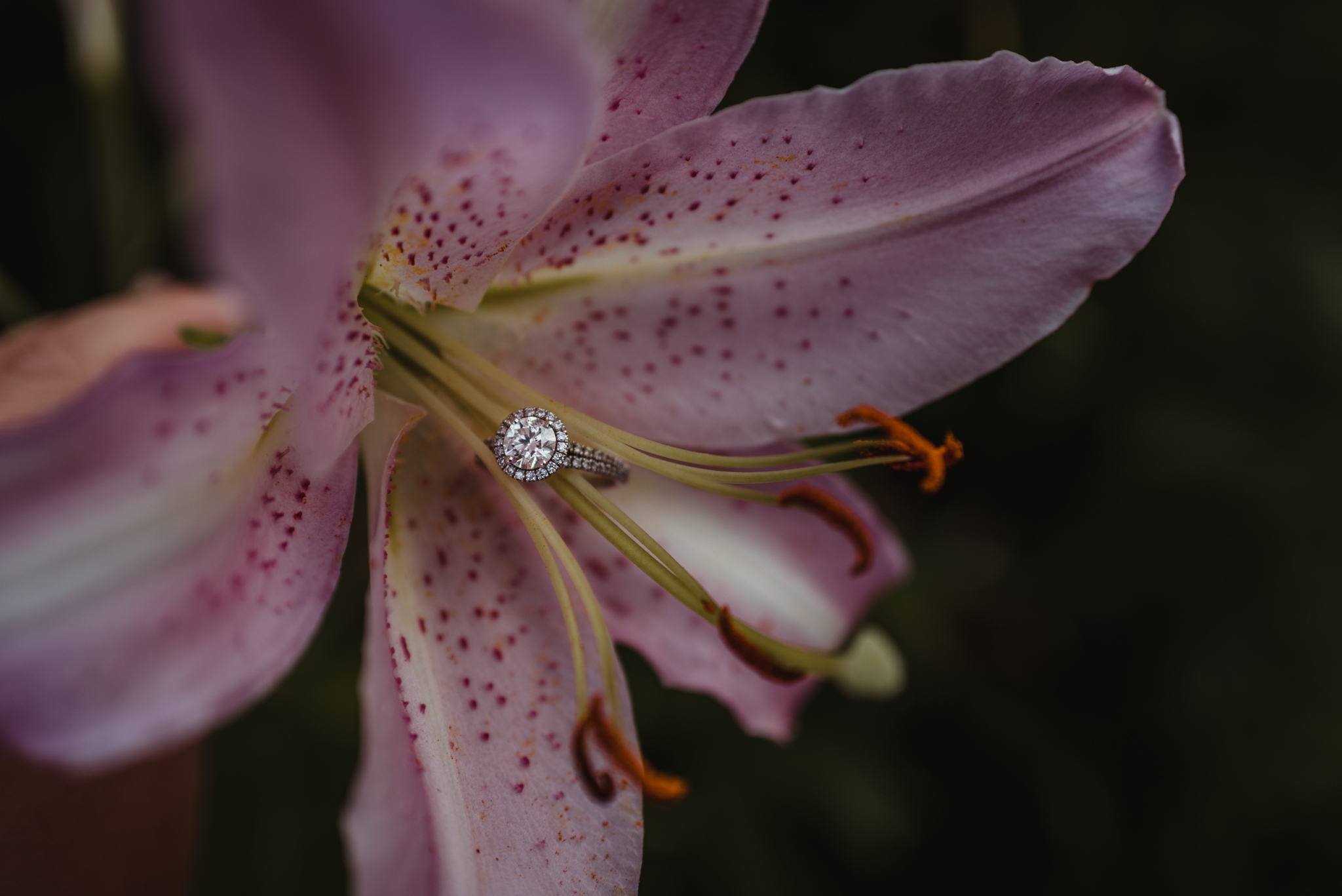 The engagement ring sits in a beautiful pink lily during their engagement session at Fred Fletcher Park in Raleigh, North Carolina with Rose Trail Images.