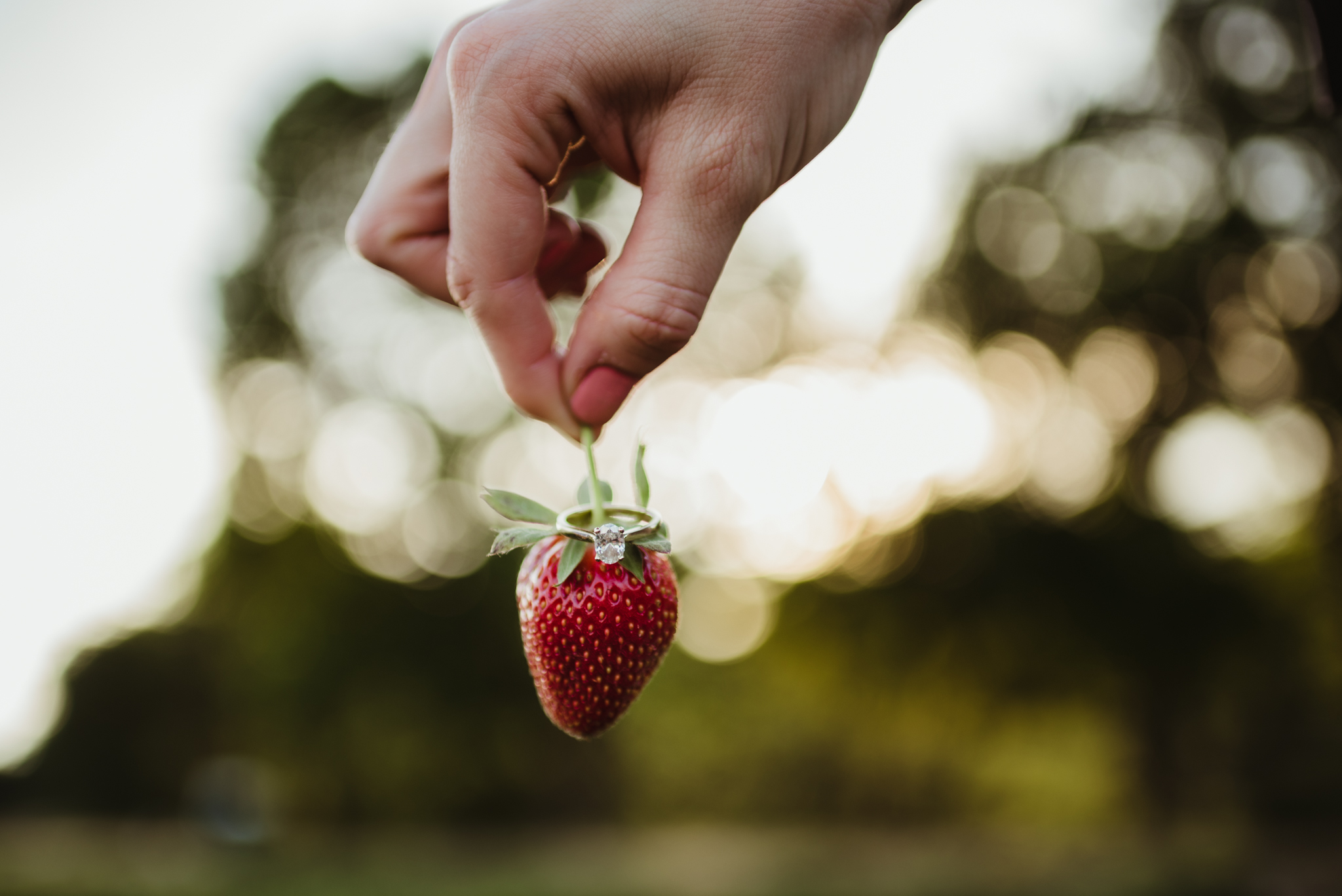 The bride to be shows off her engagement ring on a strawberry in the strawberry patch for their engagement pictures with Rose Trail Images at their family farm in Benson, North Carolina.