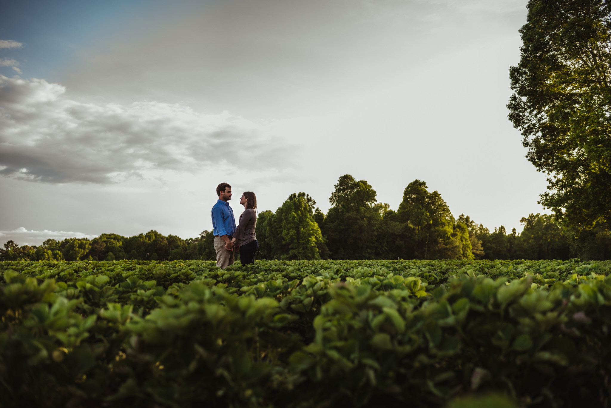 The bride and groom to be stand together in the strawberry patch for their engagement pictures with Rose Trail Images at their family farm in Benson, North Carolina.