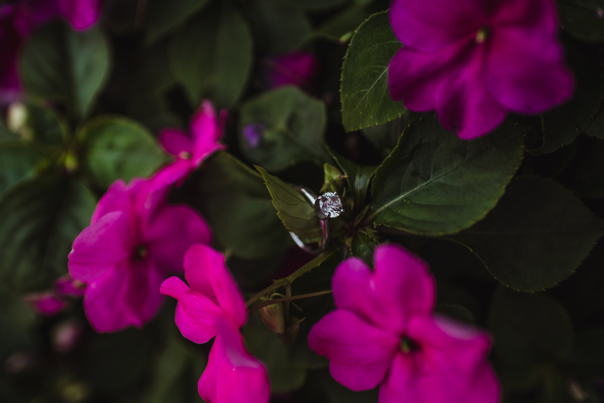 The engagement ring looked beautiful in the purple flowers at the Warren Estate for their engagement pictures with Rose Trail Images.