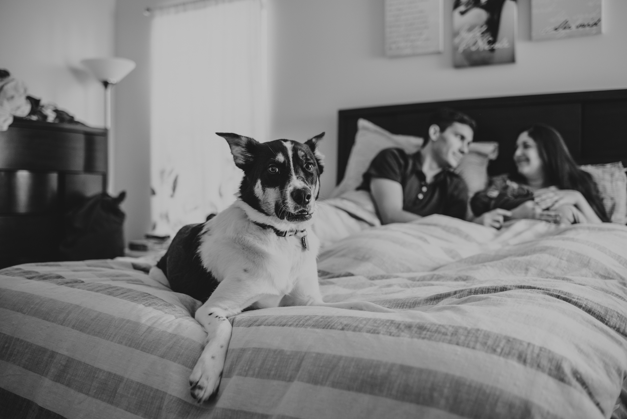 The new family snuggles with their newborn son in bed while their dog stands guard in Wake Forest, a black and white image by Rose Trail Images.