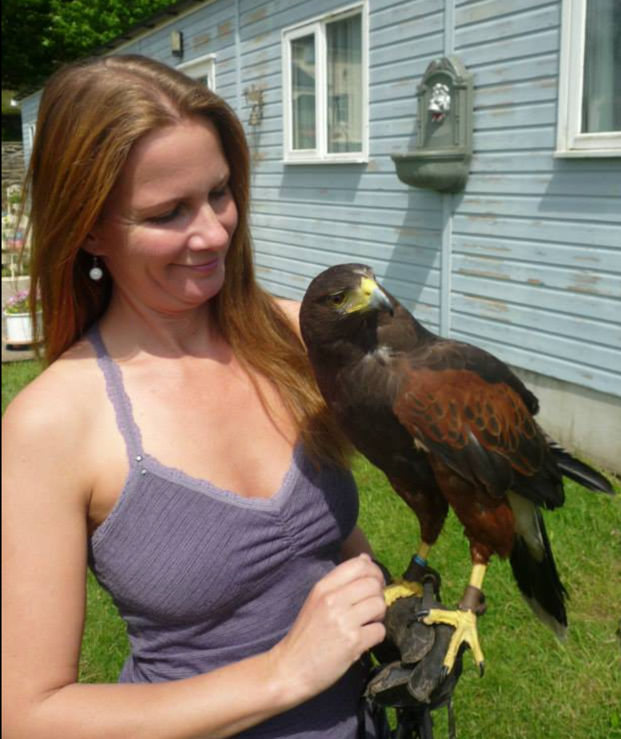Personalised hawk experience   Meet Lani, Lani is a 6 year old beautiful harris hawk. You can enjoy a personalised experience with her Owner Mari-anne. With over 8 years experience both Mari-anne and Lani will wow you and leave you inspired and uplifted by this life affirming experience.  Hawk experiences last approx 45 minutes for 1-2 people and 90 minutes for 4+ people.  During your experience you will have the opportunity to hold & fly Lani.  You can enjoy your experience onsite or meet Lani by the lake about 10 minutes away.  Pre booking necessary.  £45 per person  Contact us directly on 01570 493619 for questions and bookings.