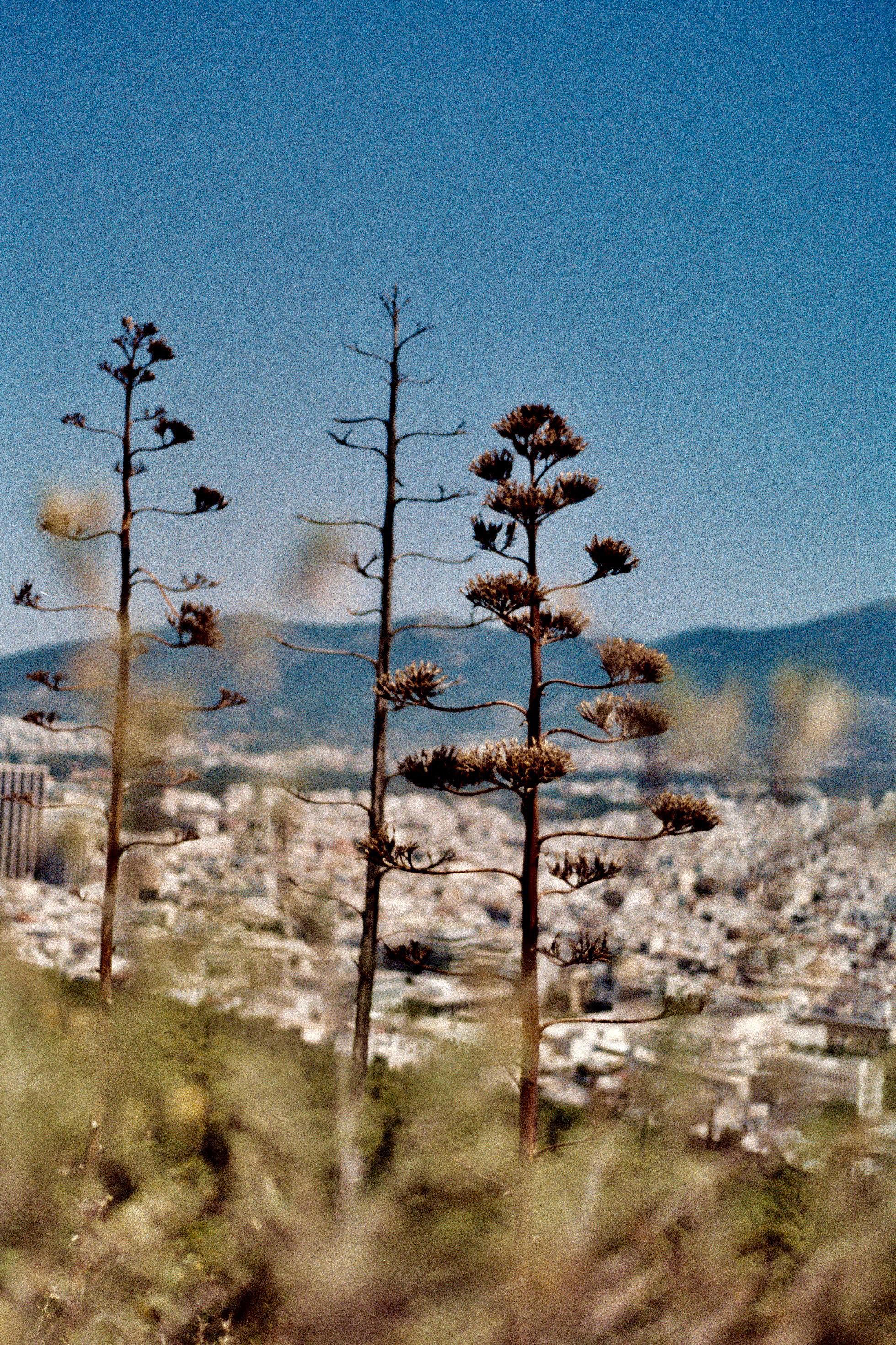 greece roll 5AA017A.jpg