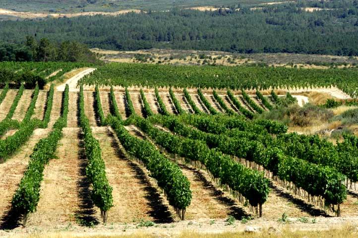Beira_Interior_Region.jpg