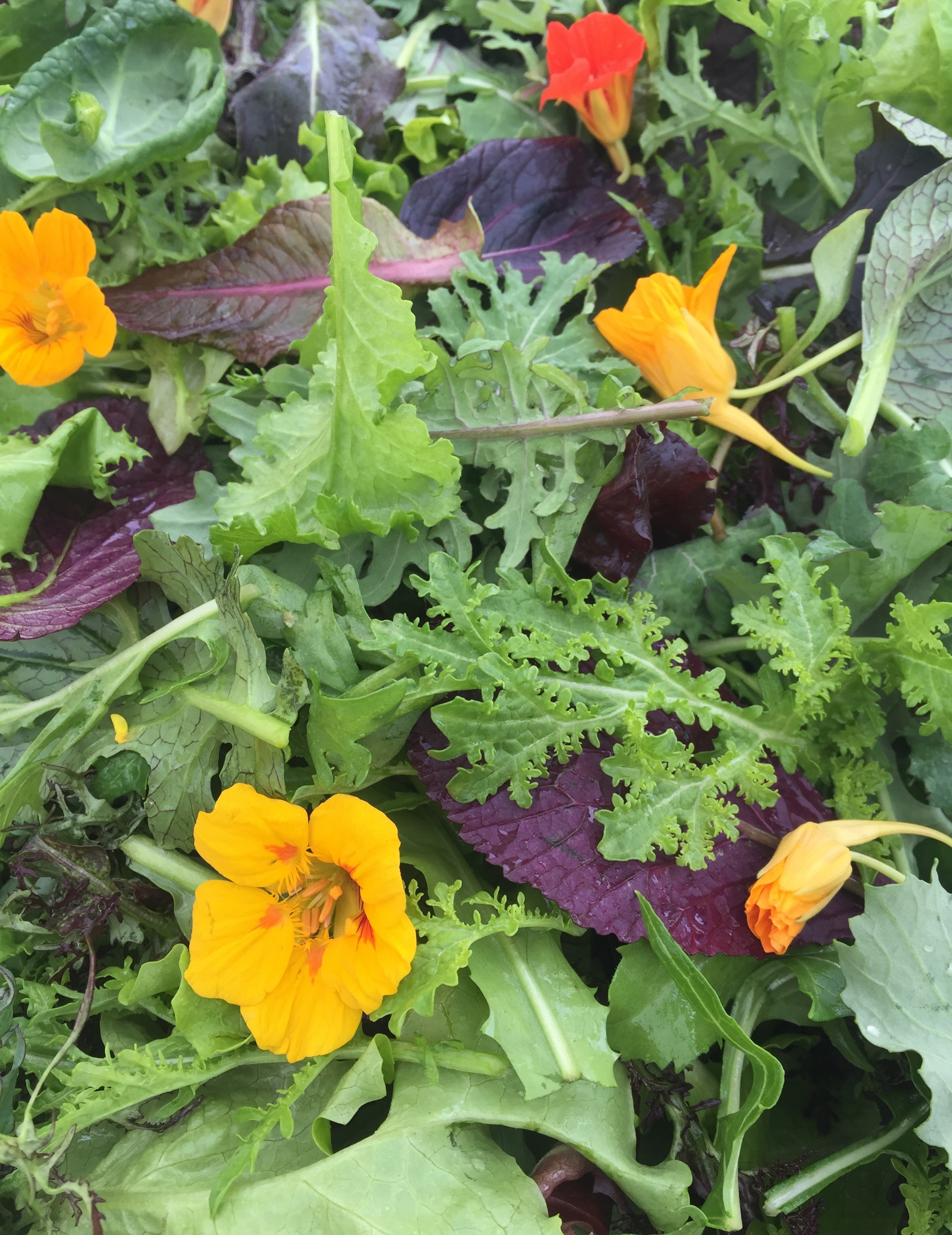 Nasturtiums in our mesclun mix