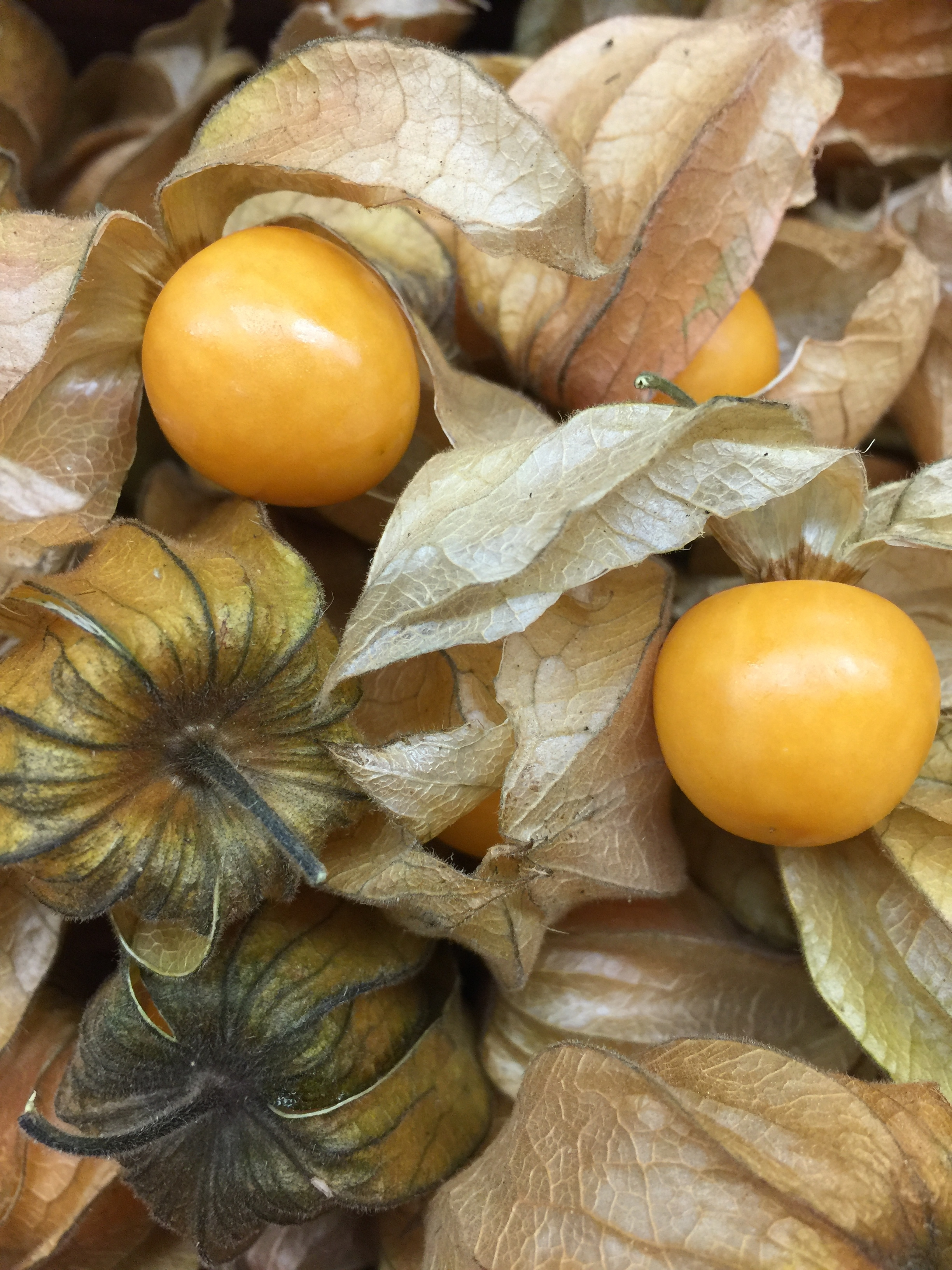 GOLDEN BERRIES  -