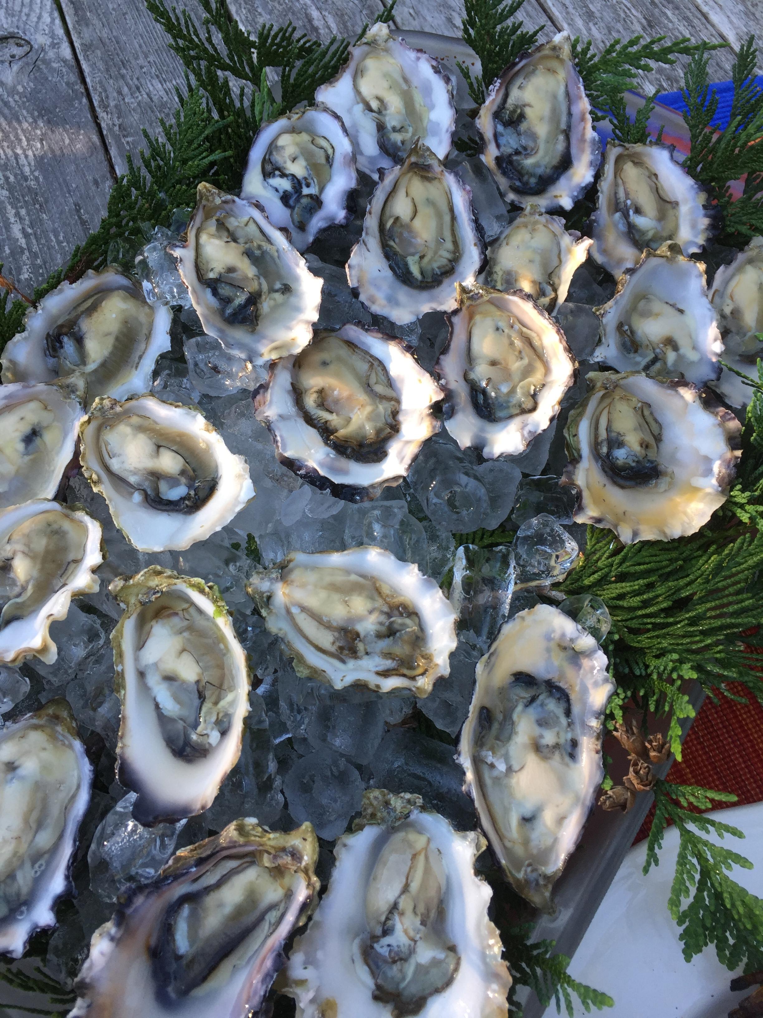 Buck Bay Shellfish Farm Oysters