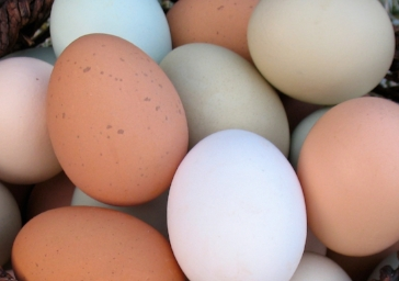 cropped eggs for background.jpg