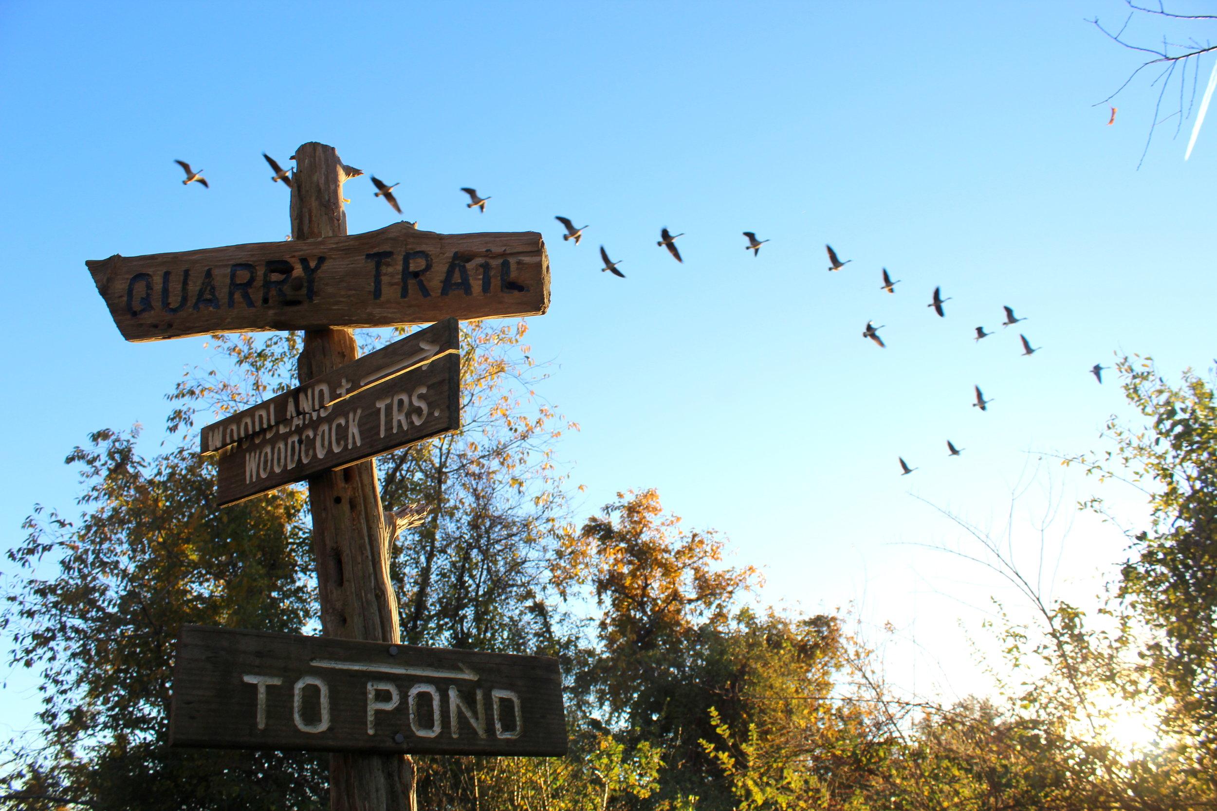 11-7 trail sign geese 2 11-7.JPG
