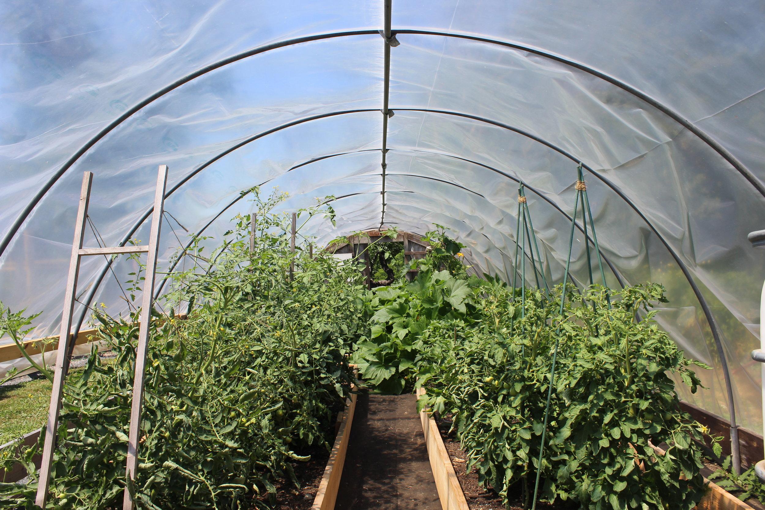 good gardens Hoop house in july