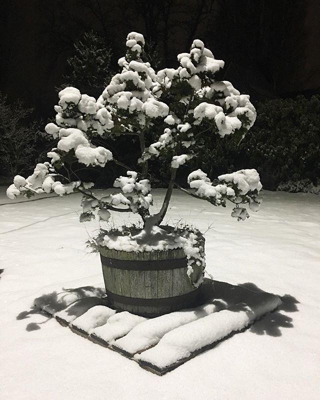 Snow tonight. #pnw #skagitvalley #snow